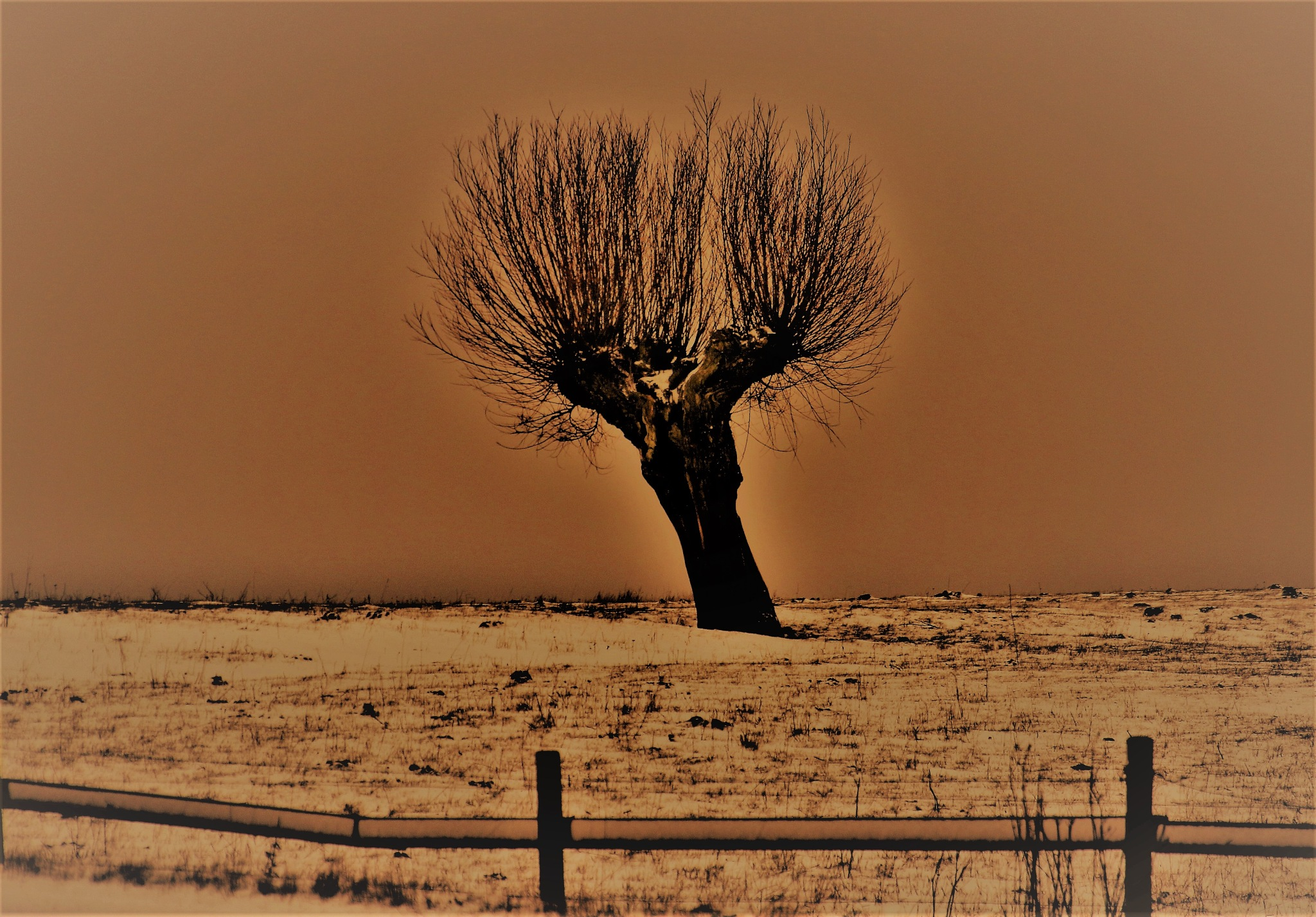 A Willow in the Snow. by KerstinP.