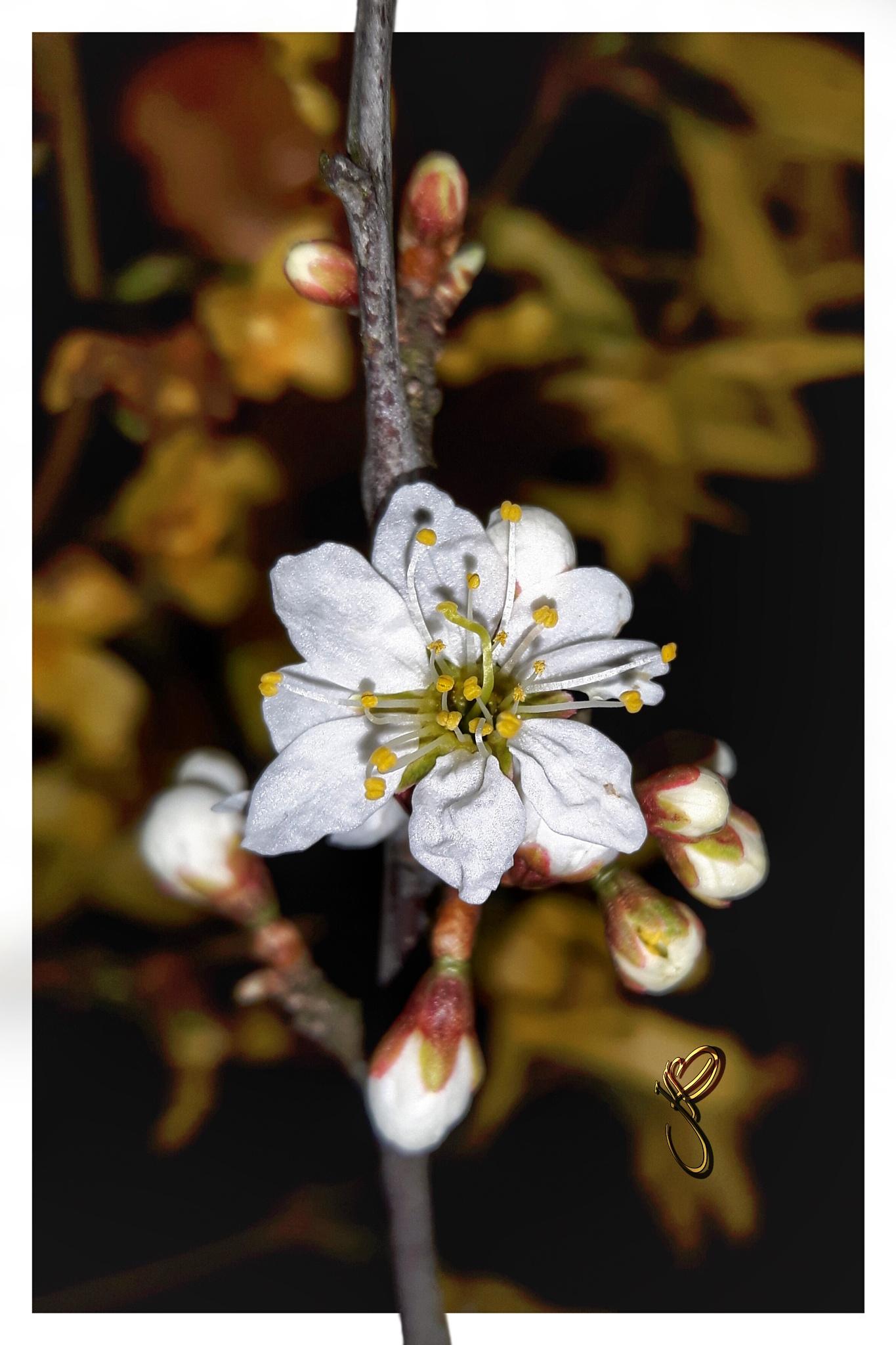Photo in Random #flora #blossom