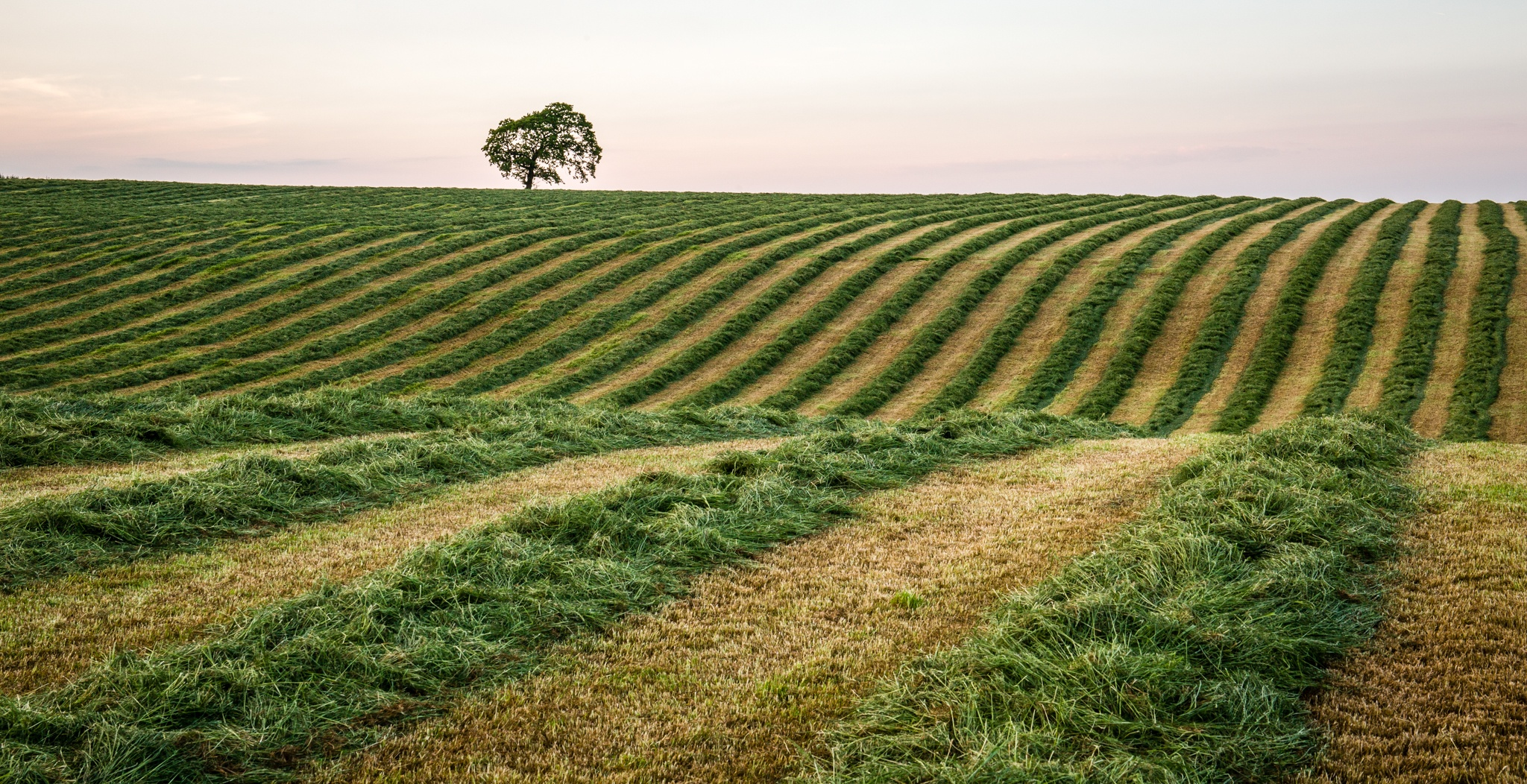 Photo in Landscape #stripes #mown grass #yorkshire #uk