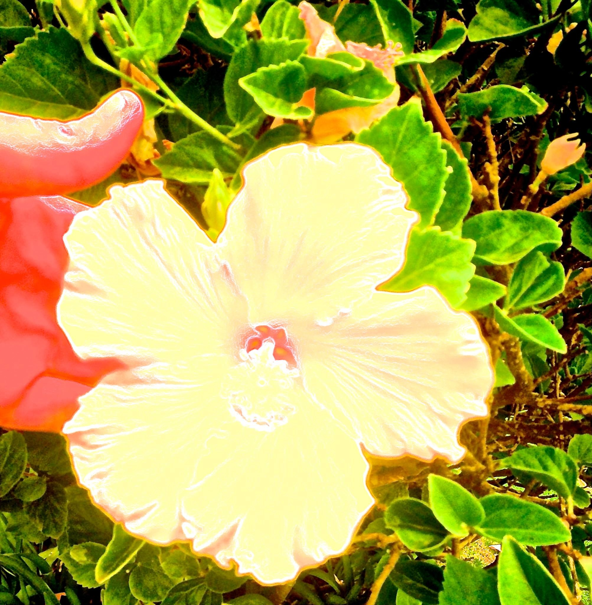 Electric Yellow Hibiscus Dreams by Jimmy James Hames