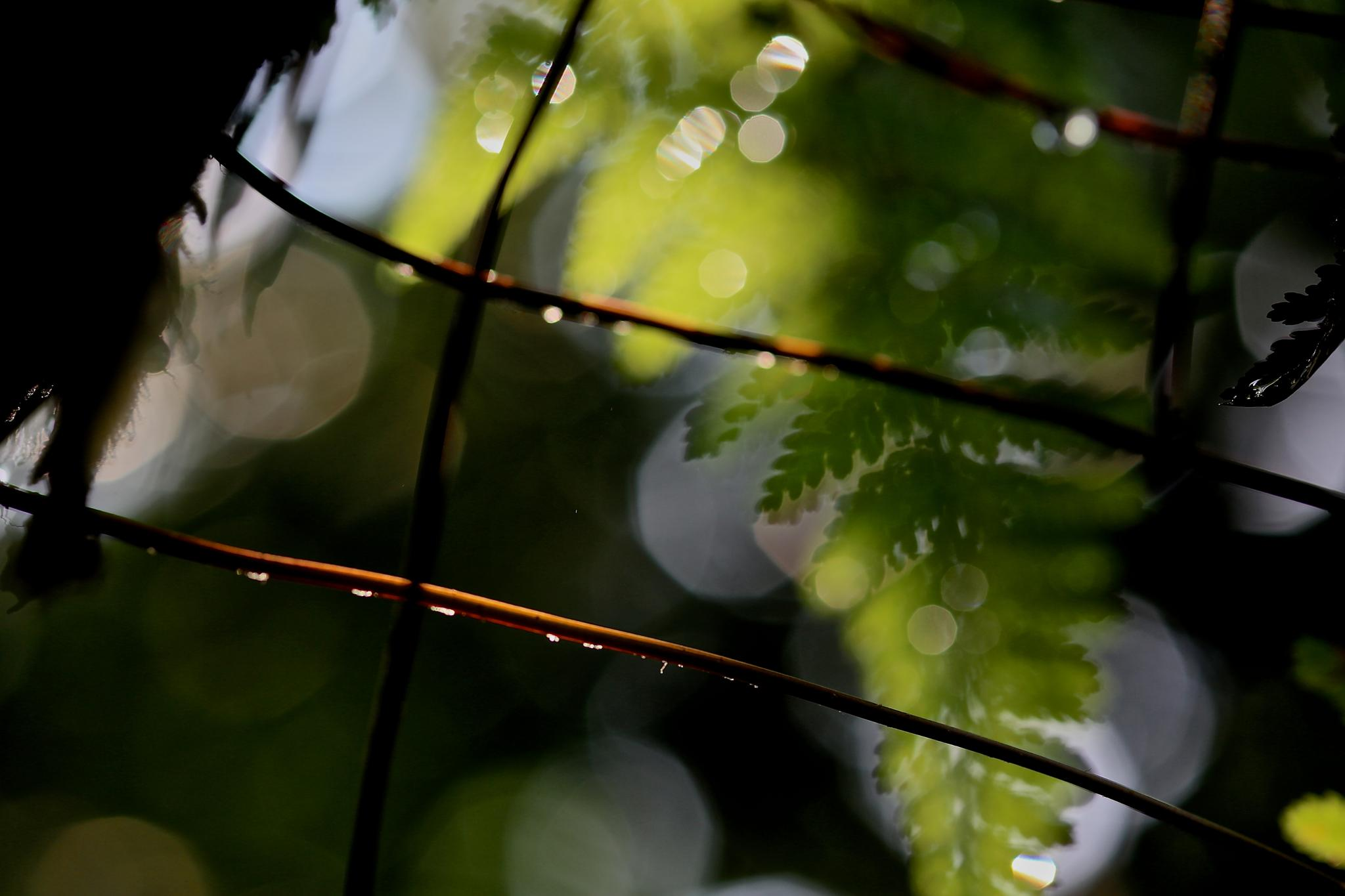 Untitled by Cheng Cho Yau Joe