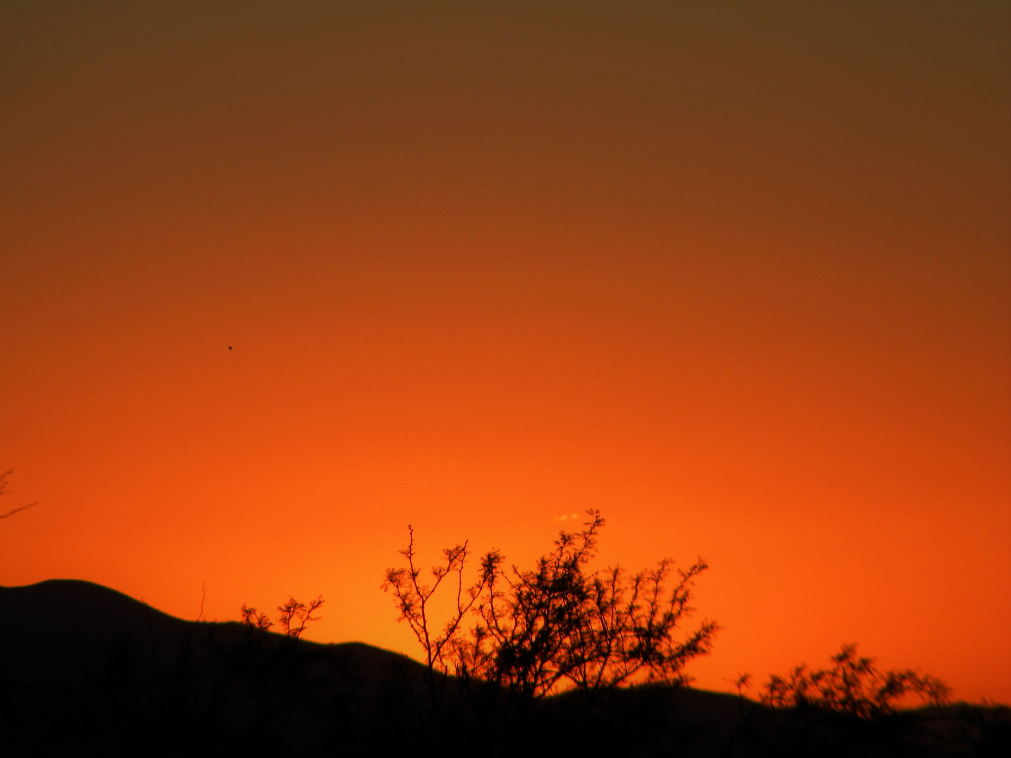 Desert Sunset by Alan Wertsbaugh
