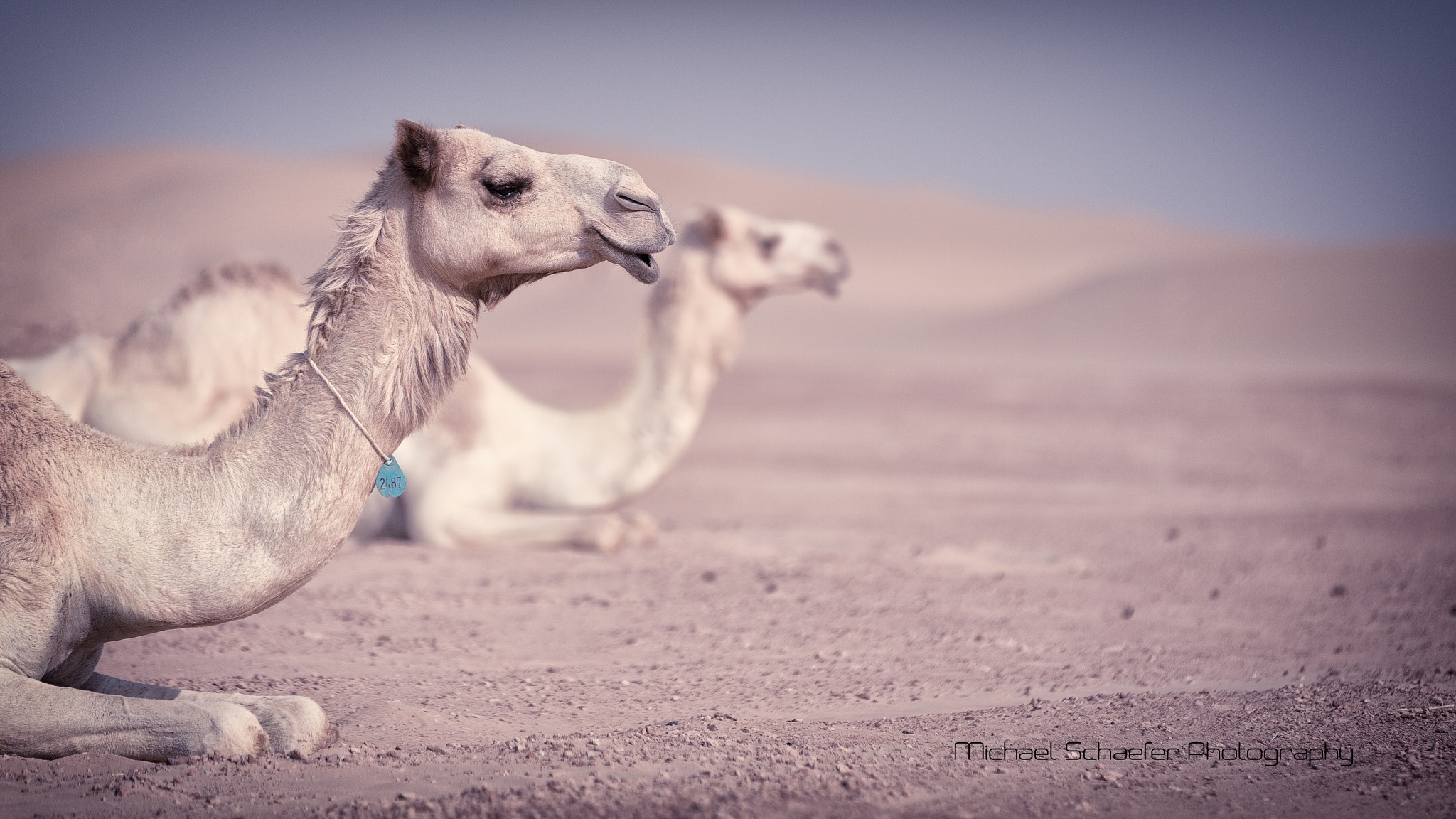 Camel Relax Wellness and Spa by 247Capture