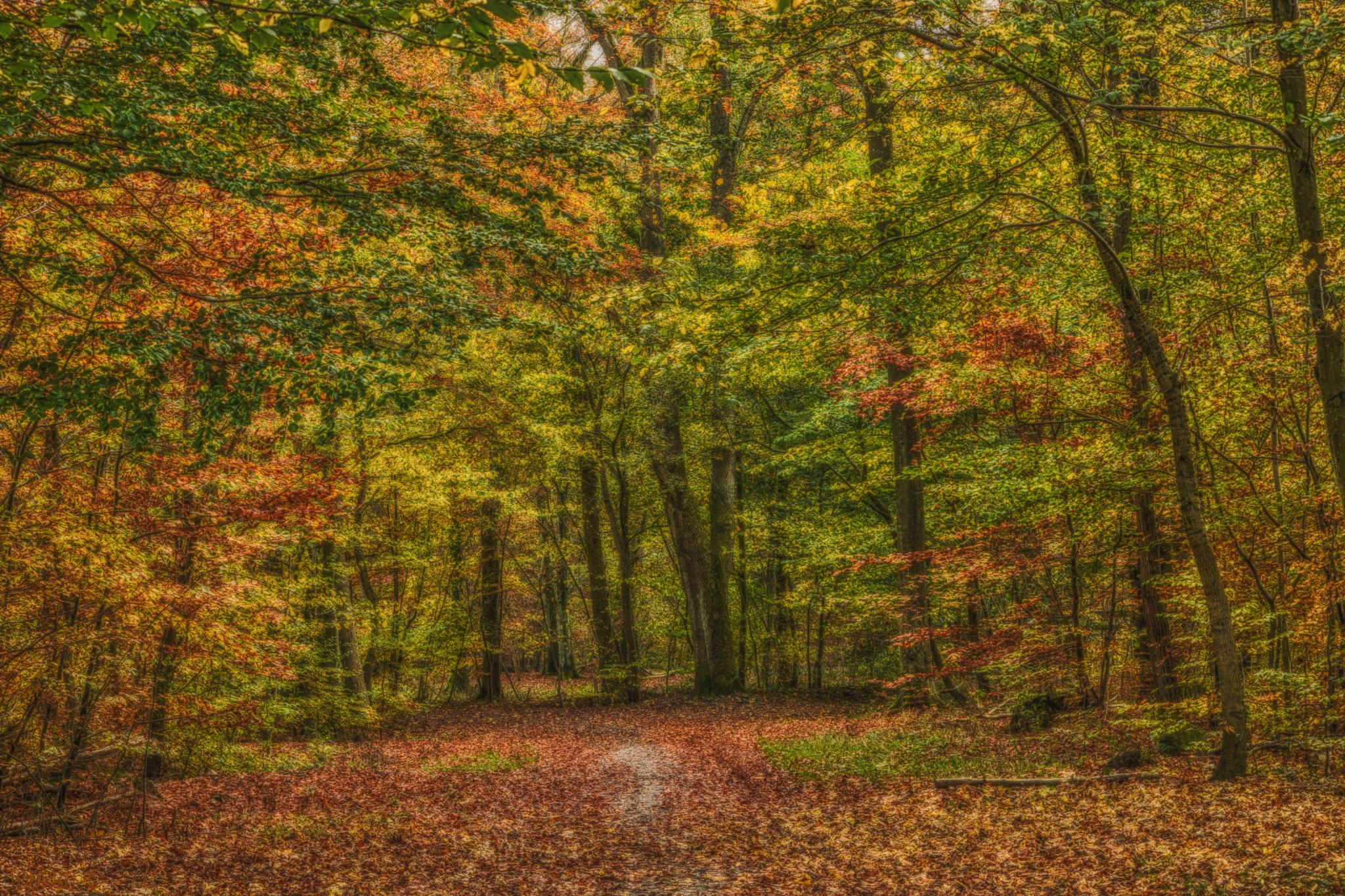 Photo in Nature #autumn #forest #leaf #leafs #tree #trees #colors #fairytale #hd #fall #denmark #copenhagen #tourbo