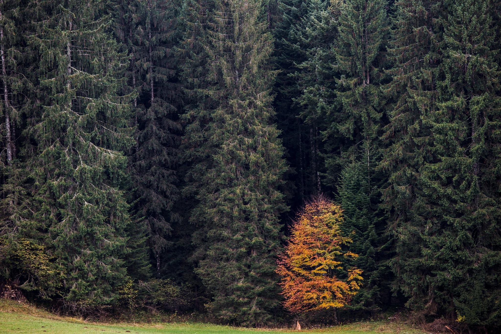 Autumn by Giovanni Battagliola