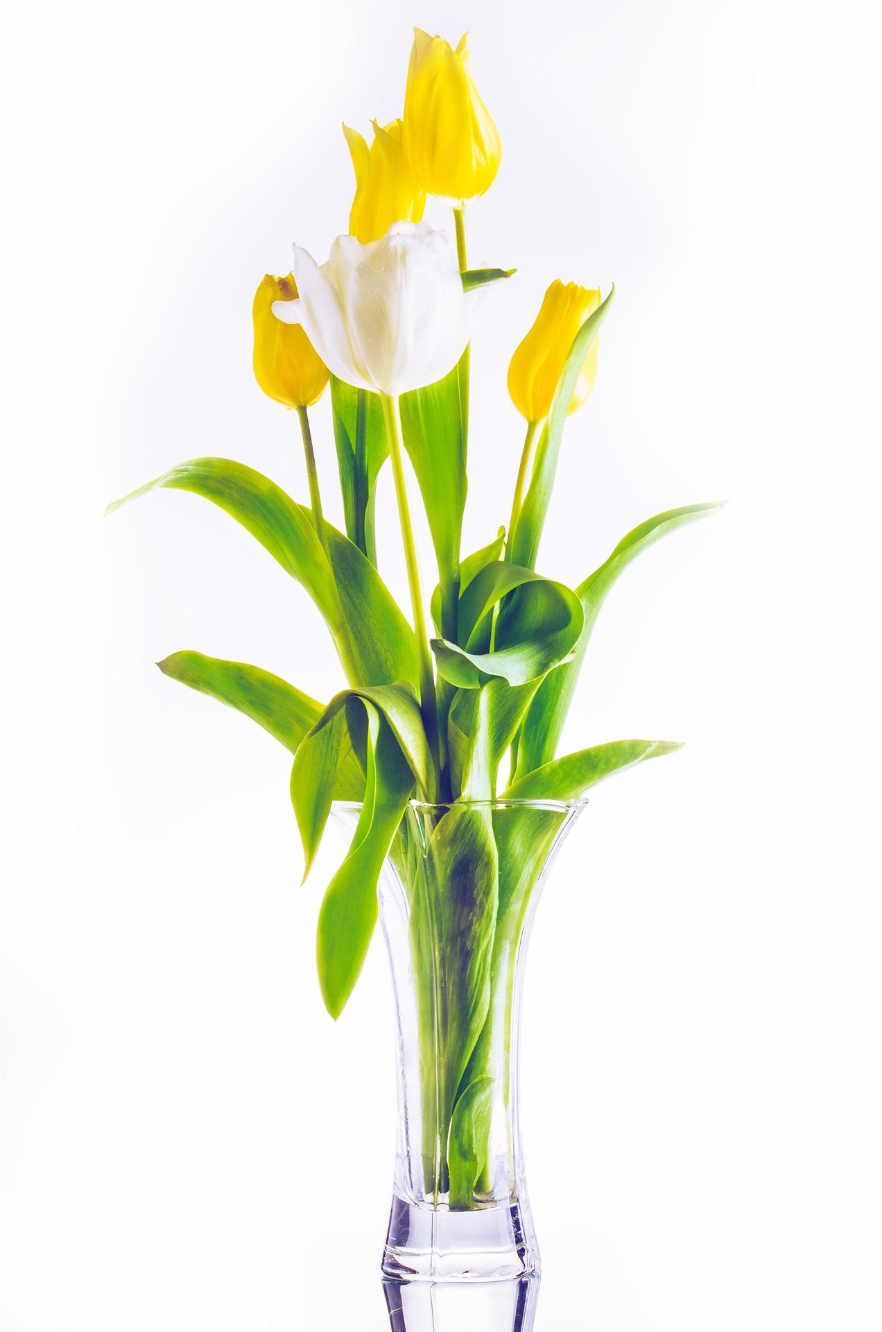 Tulips by Christian Ballé