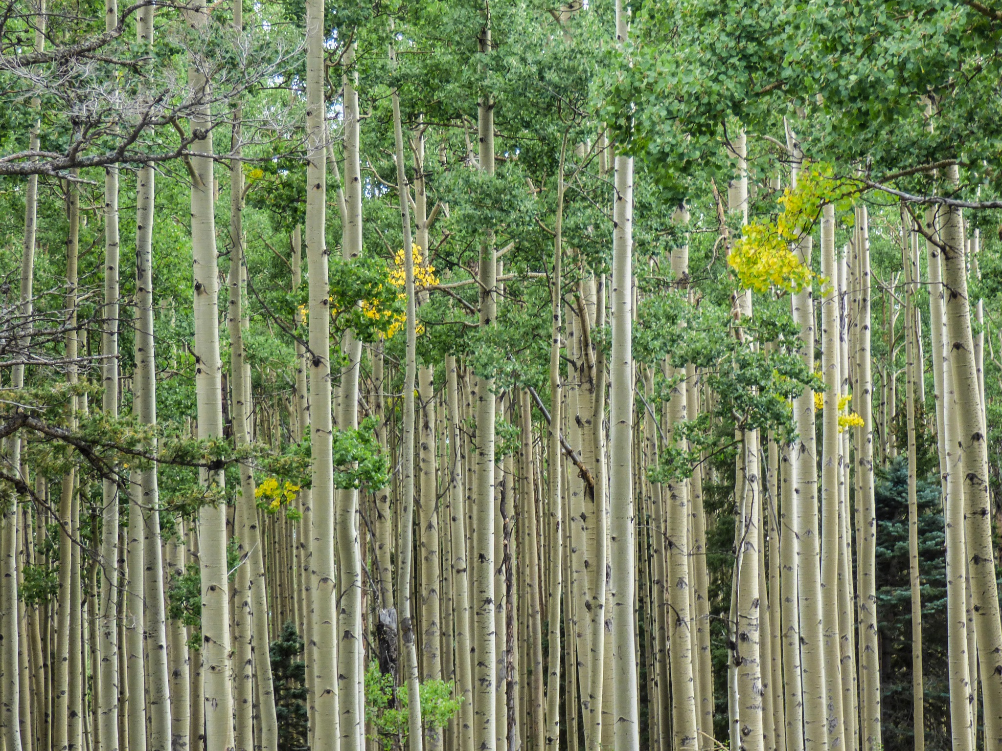Aspens: my first downloads in a while (more to come) by Hunter Ten Broeck