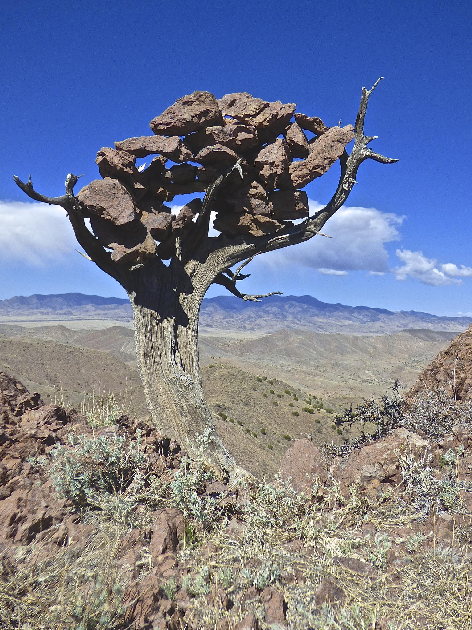 Rock Tree by Hunter Ten Broeck