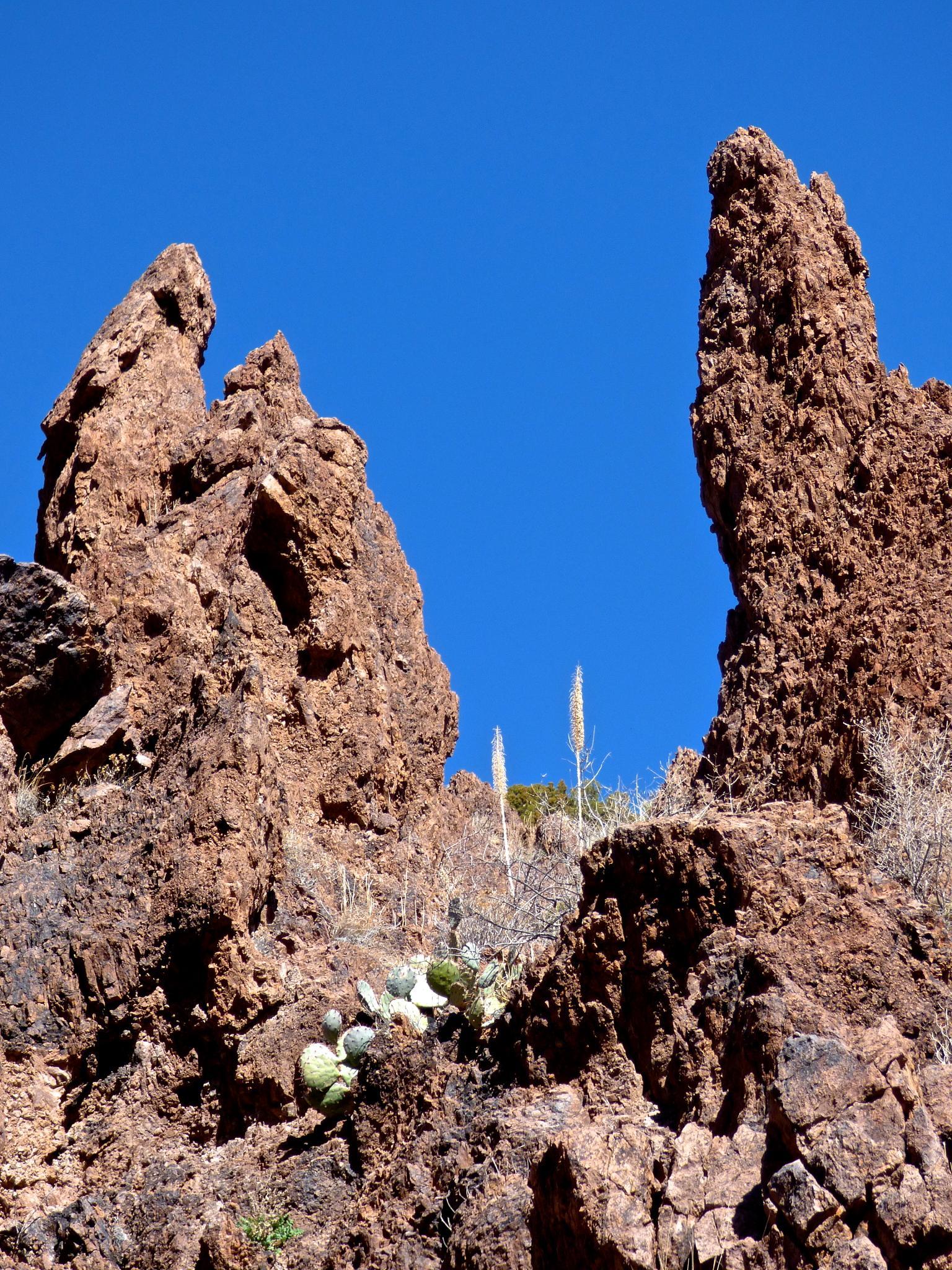 Sotol flowers spikes on Chupadera Peak New Mexico by Hunter Ten Broeck