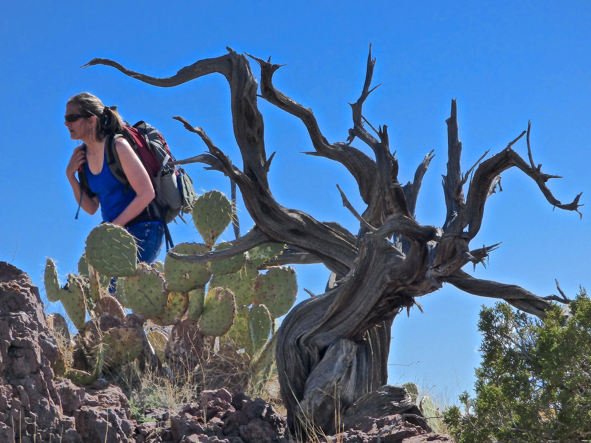 Hiking on a desert mountain by Hunter Ten Broeck