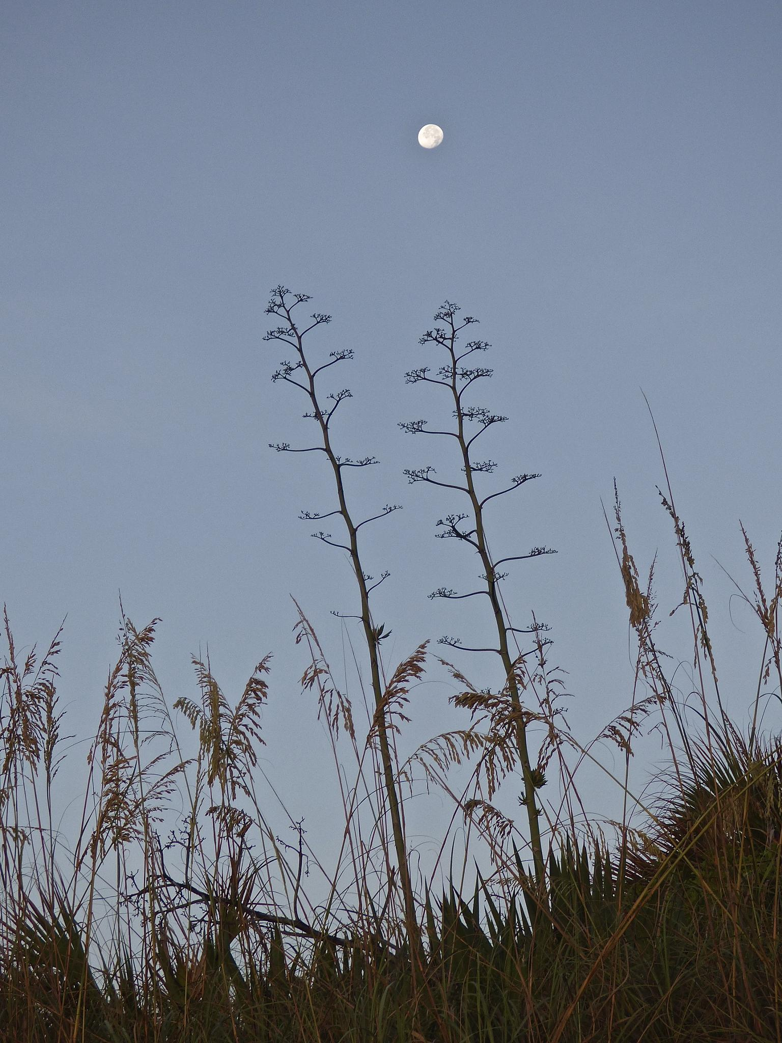 Moonset over the dunes by Hunter Ten Broeck