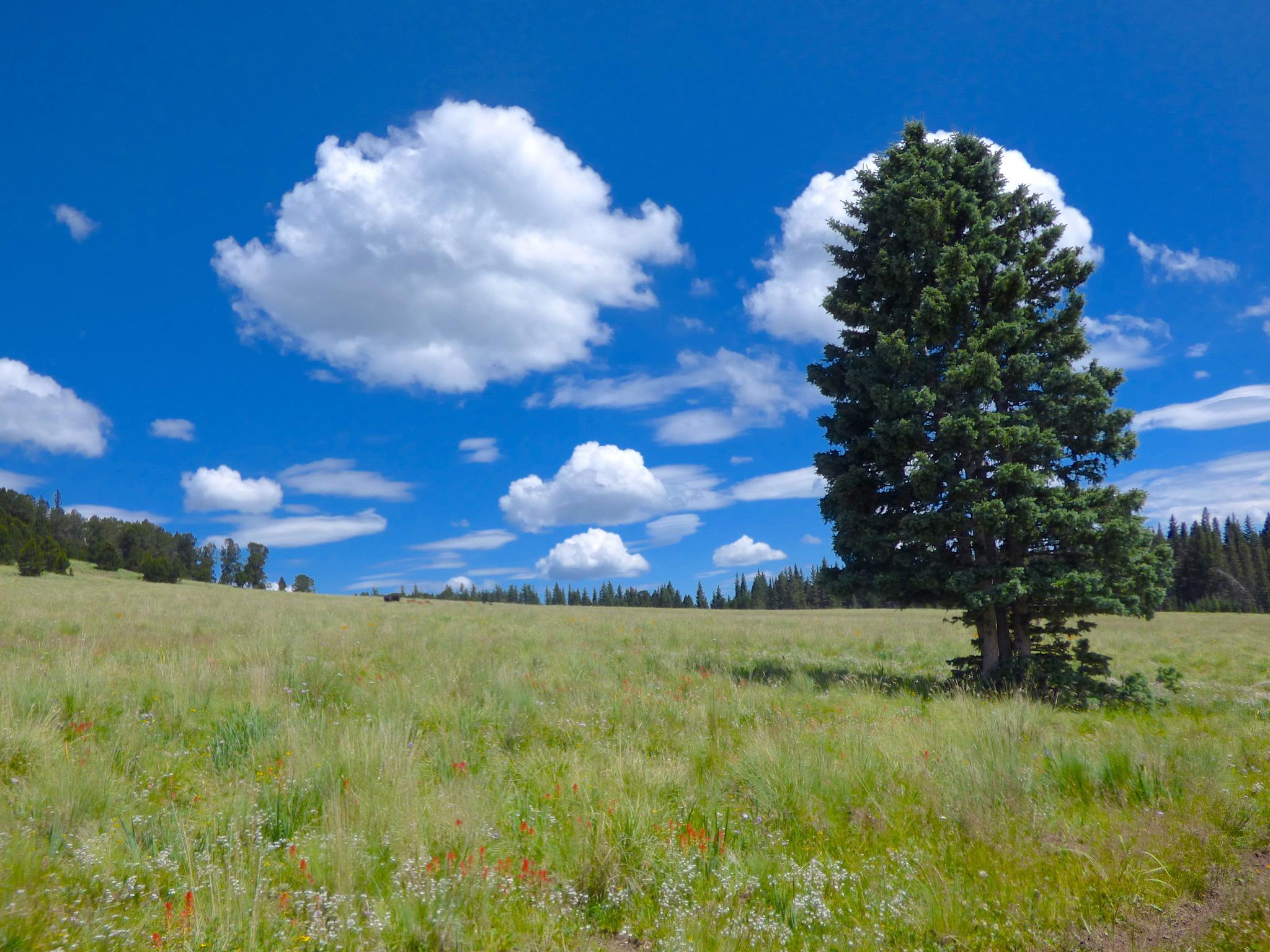 High mountain meadow by Hunter Ten Broeck