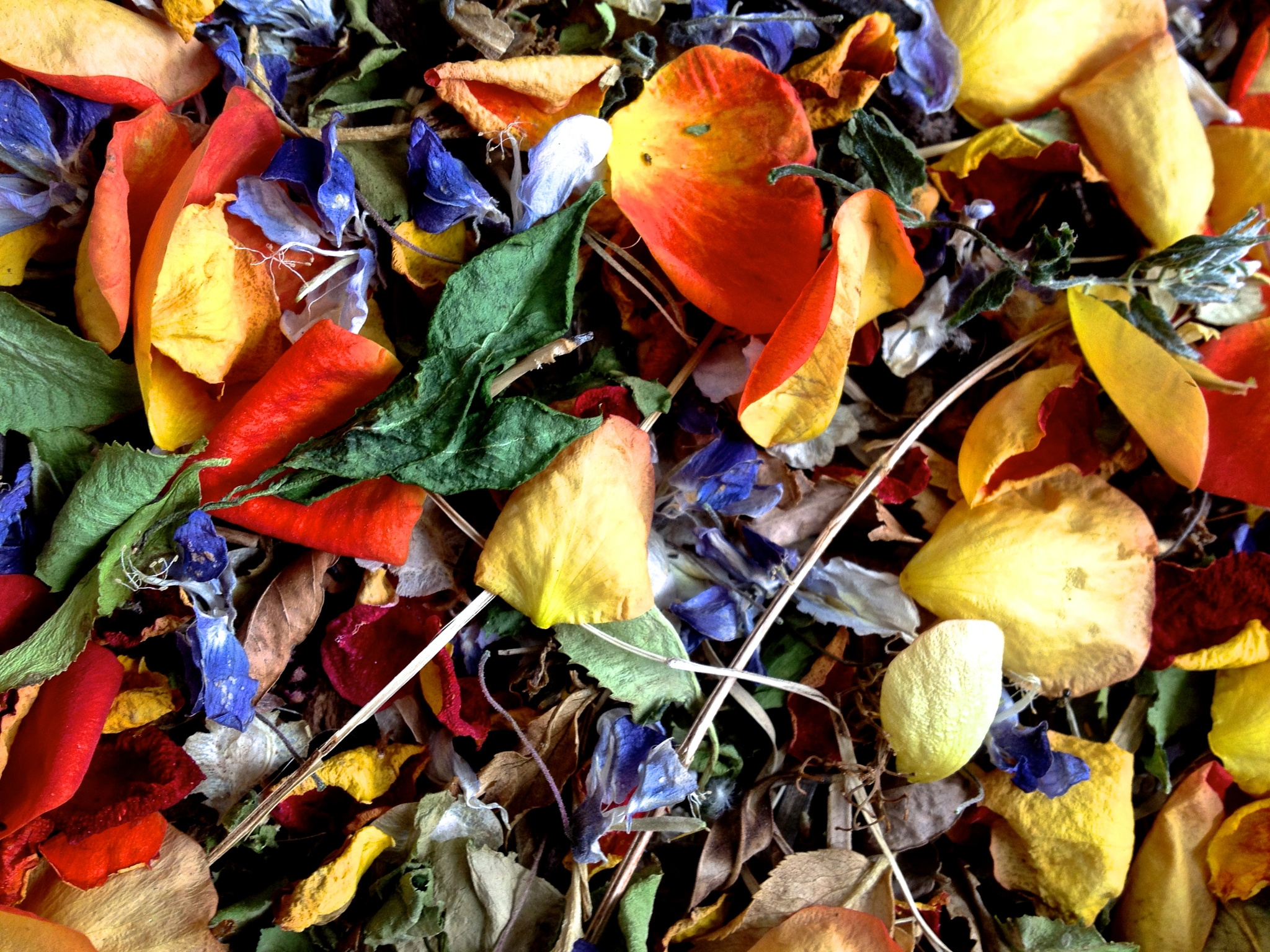 Petals and leaves by Hunter Ten Broeck