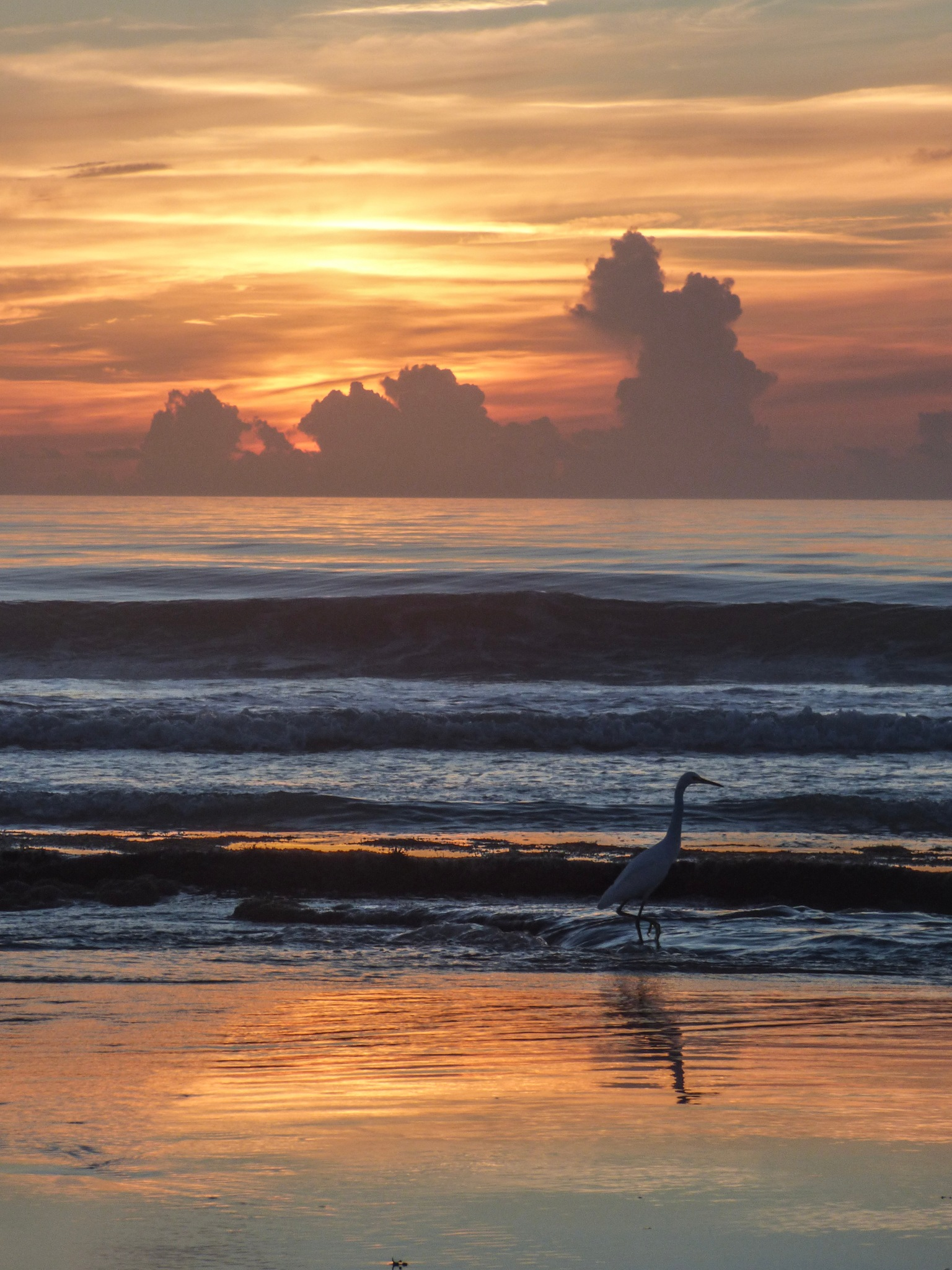Egret at sunrise in Florida by Hunter Ten Broeck