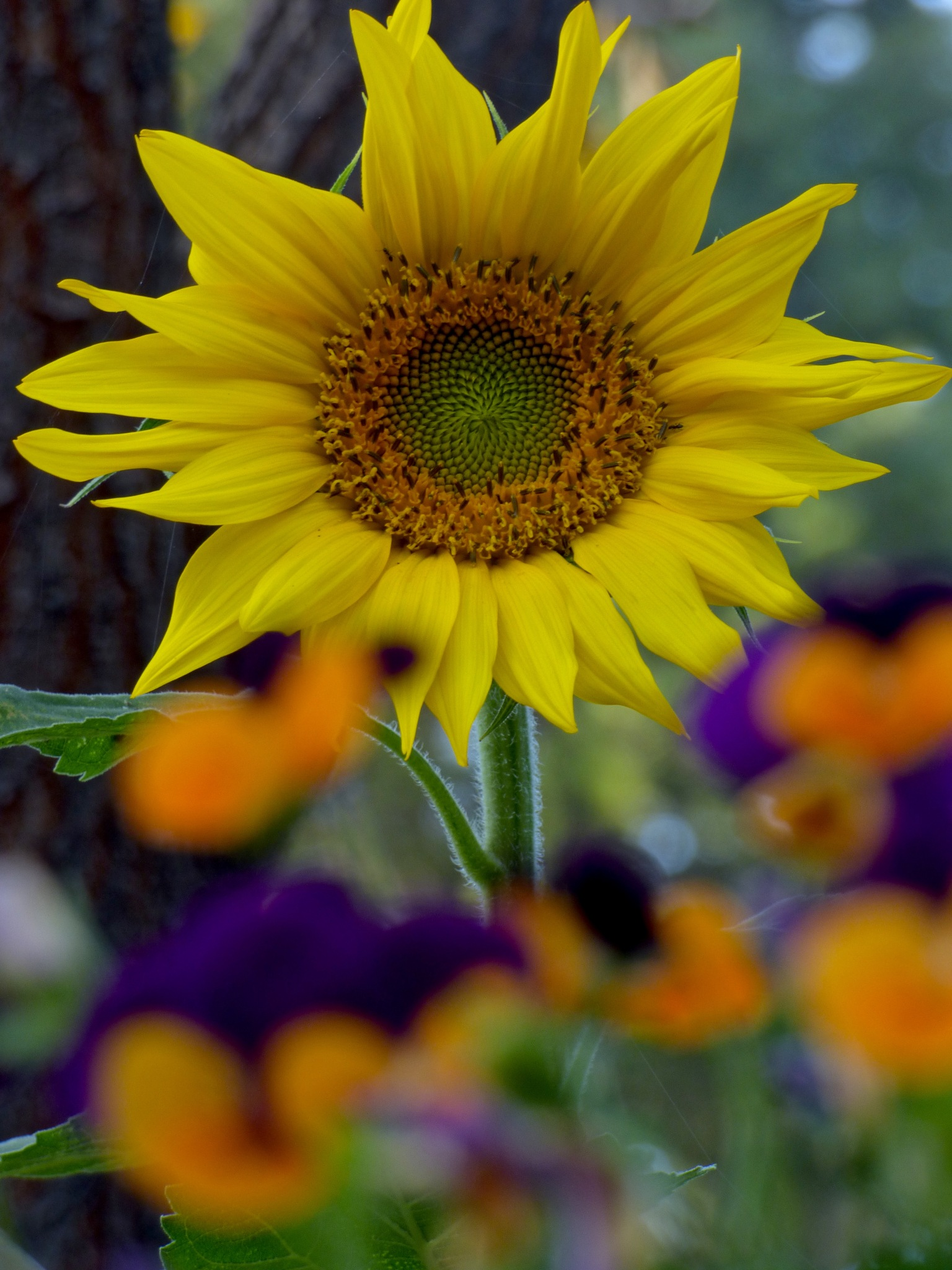 The Last Sunflower by Hunter Ten Broeck