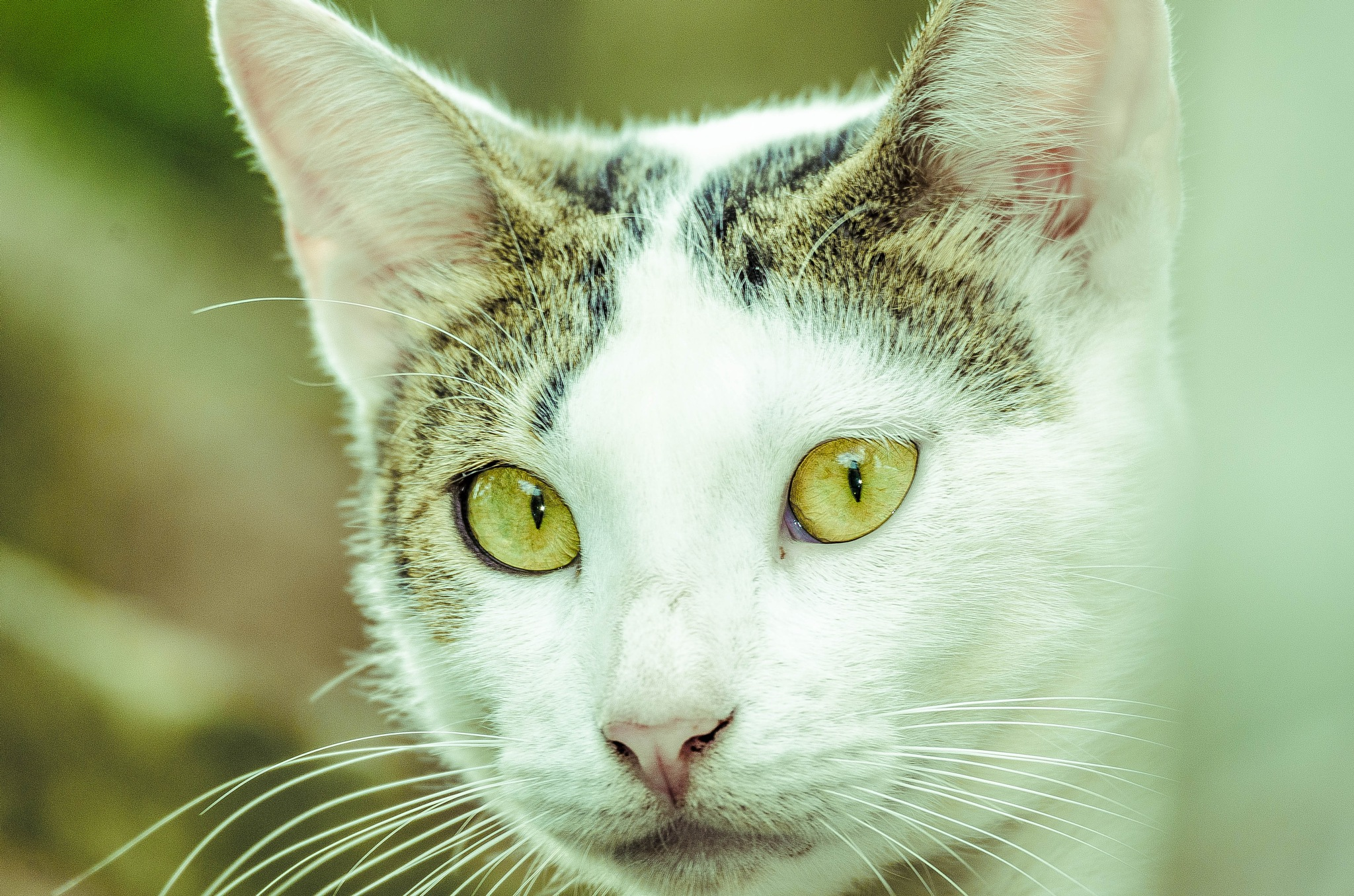 Gato by Lau  Loko -Lokos Por Imagens