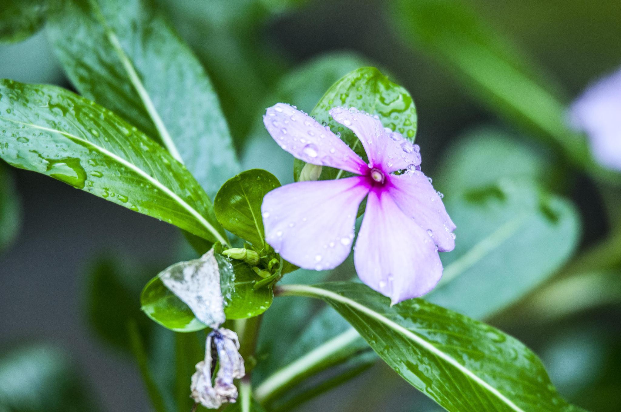 Flor Mas Verde by Lau  Loko -Lokos Por Imagens