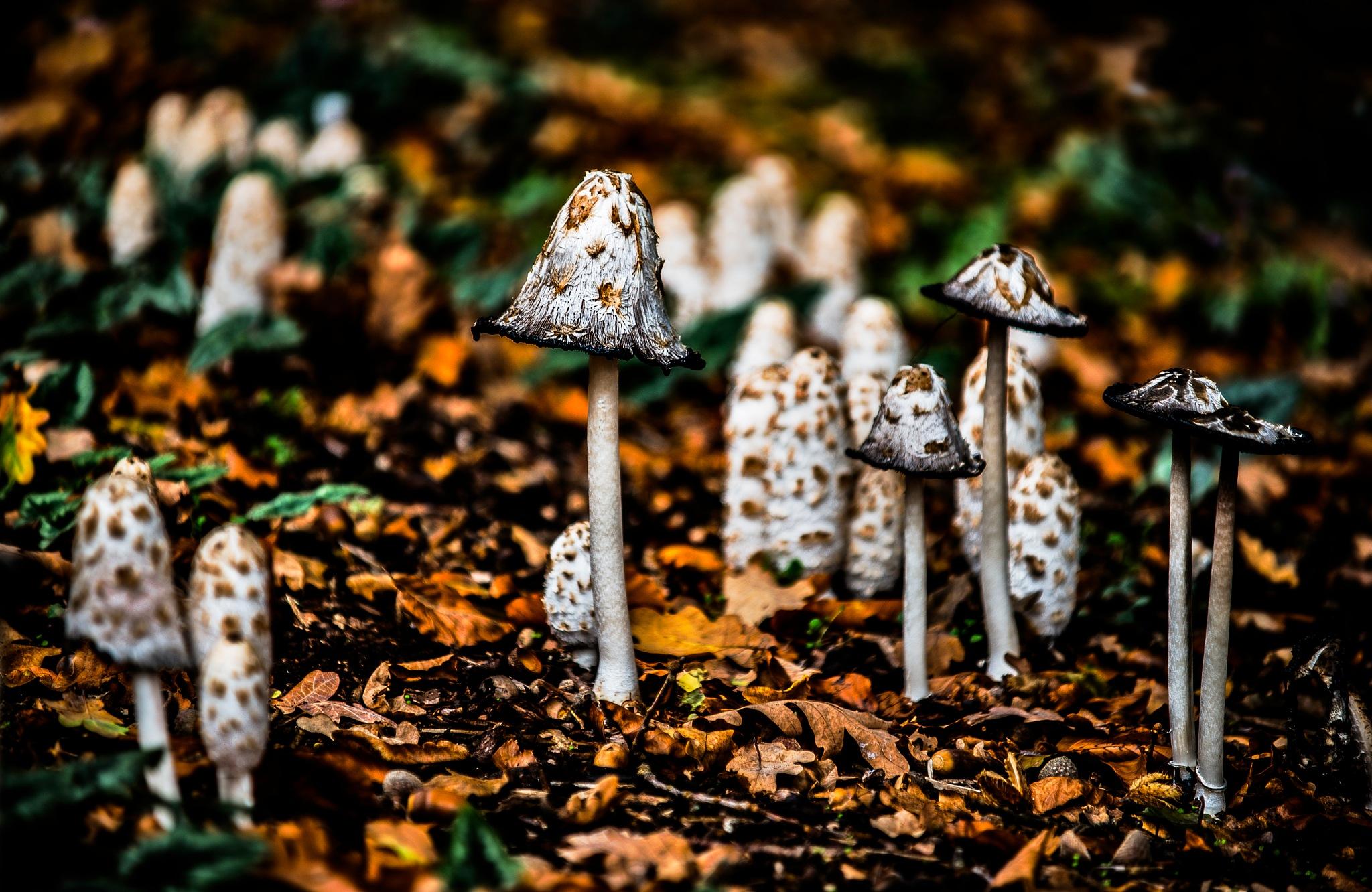 Fungi by MarkGray