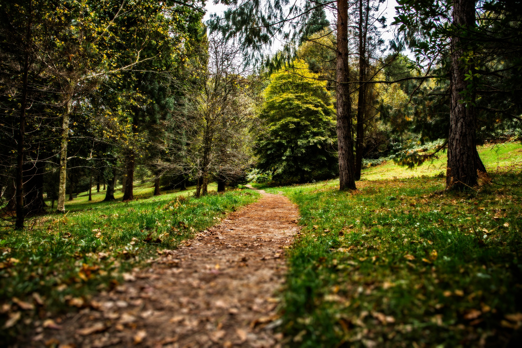Pathway by MarkGray
