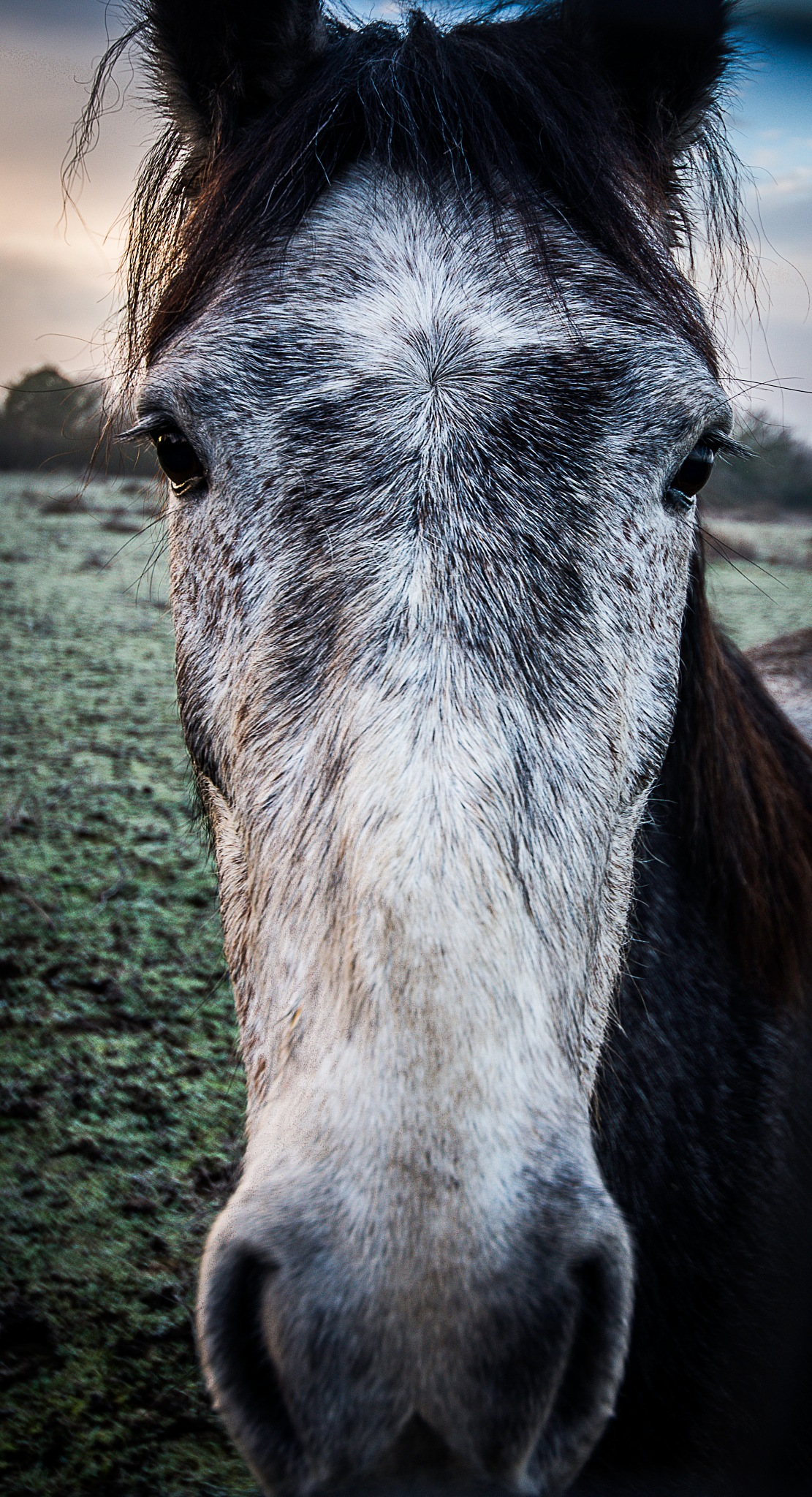 Long faced by MarkGray