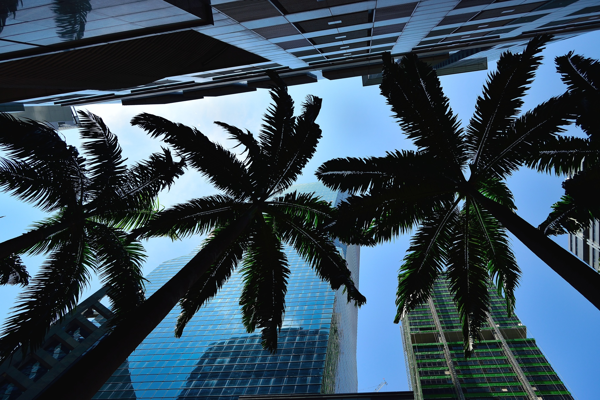 Palms in the City by JustinAdamLee