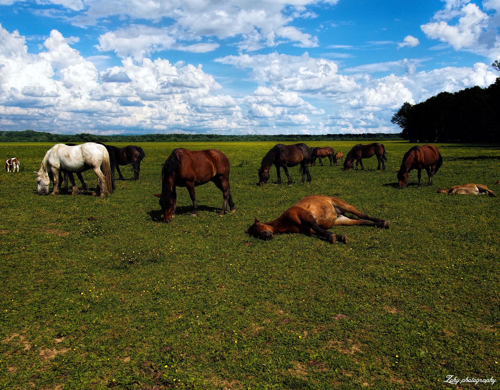 horses by zoki