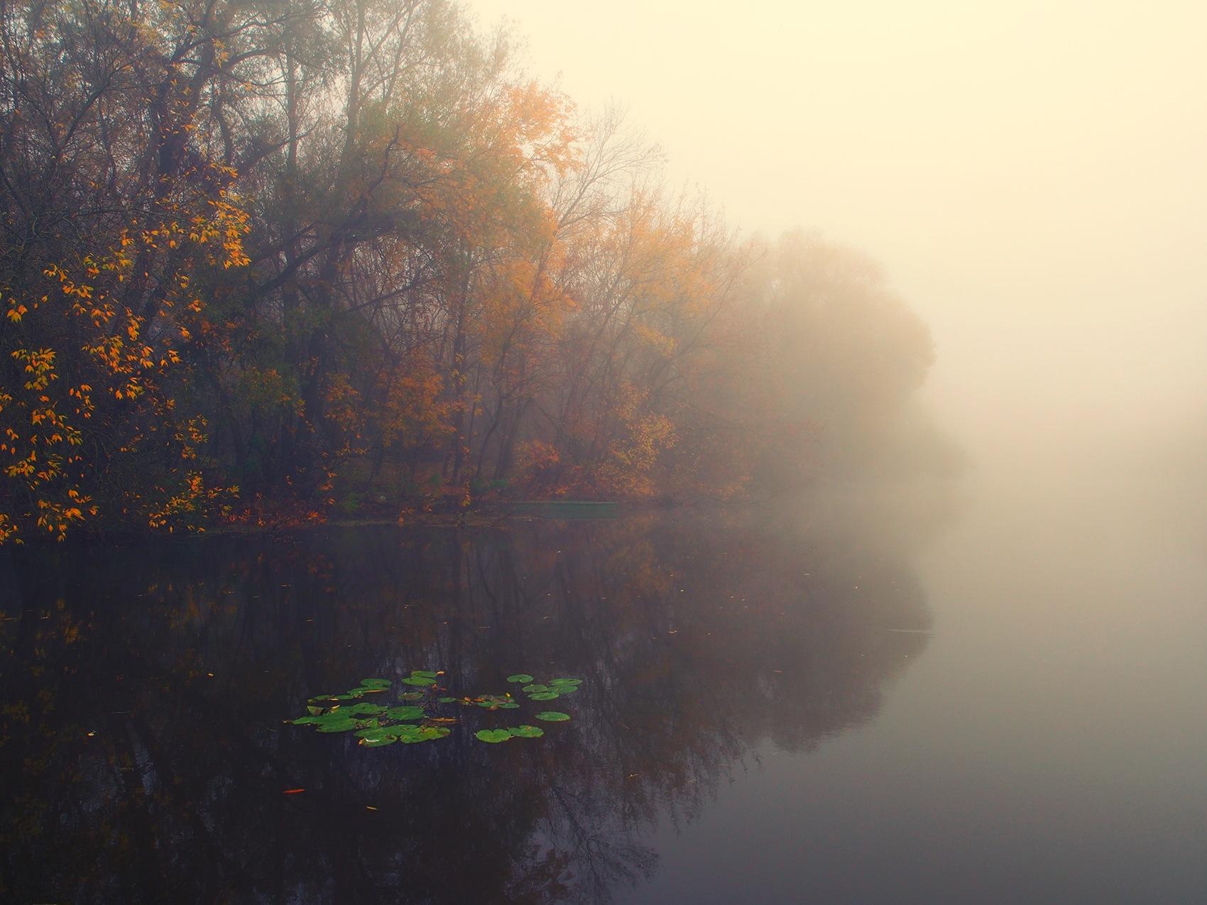 Fog by zoki
