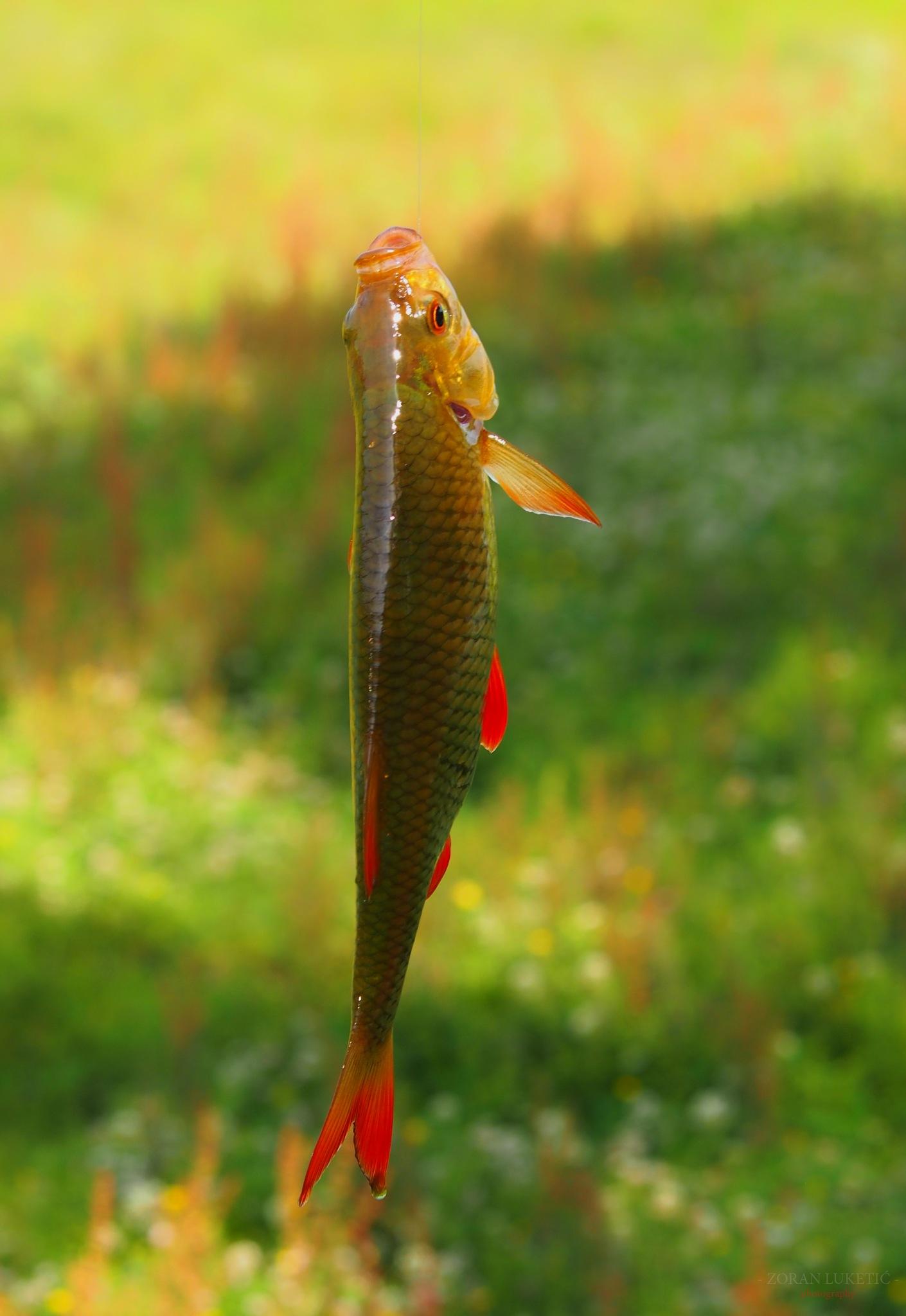 Fishing by zoki