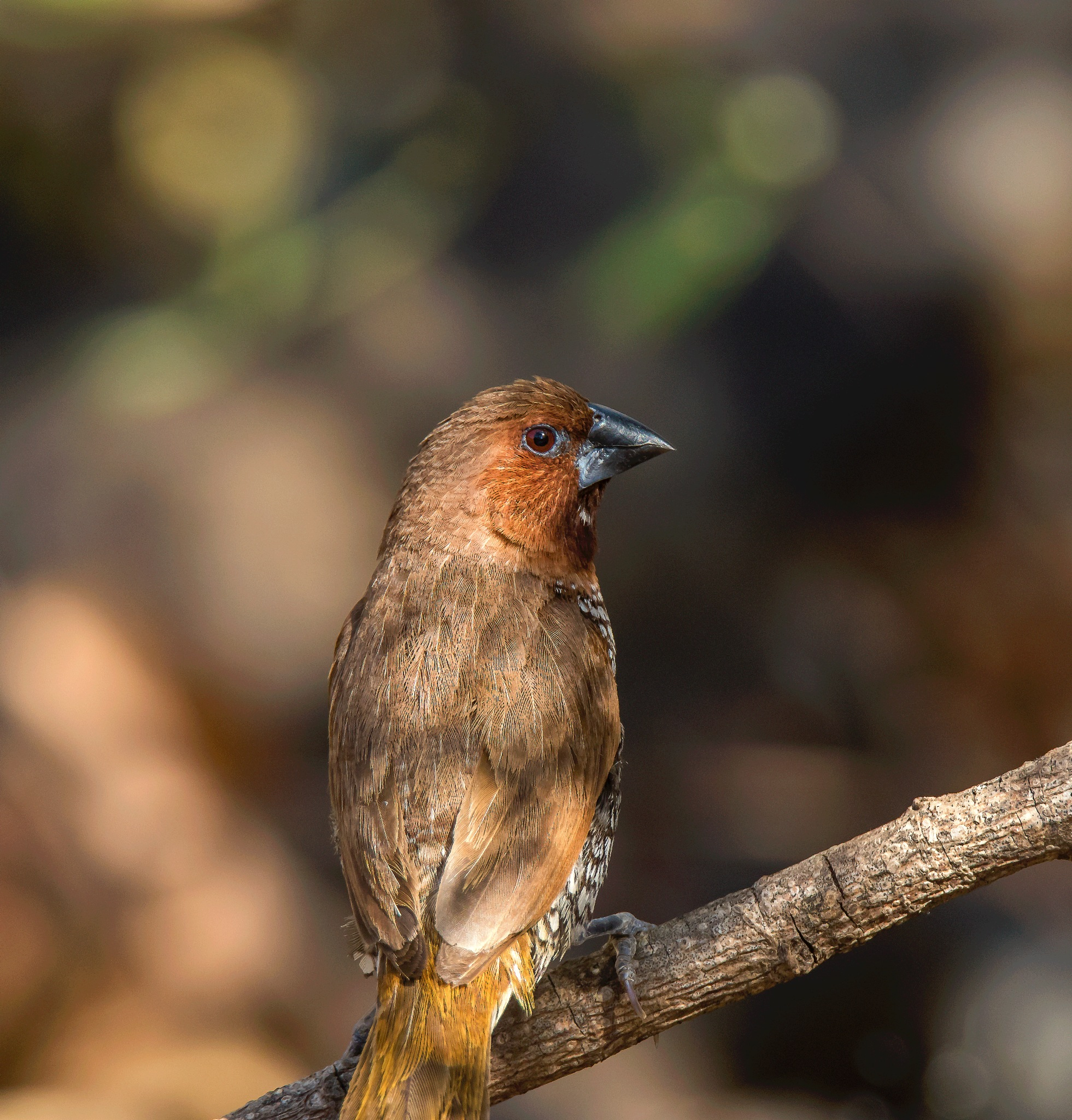 Photo in Nature #birds #munia #pune #stream #valley