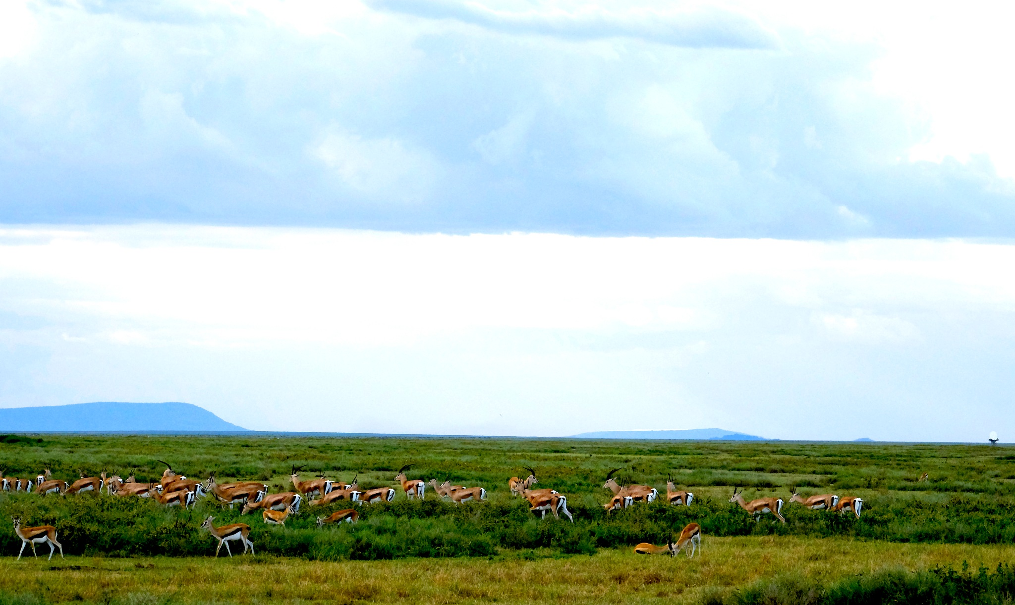 Gazelle-scape by DrSudhir Hasamnis