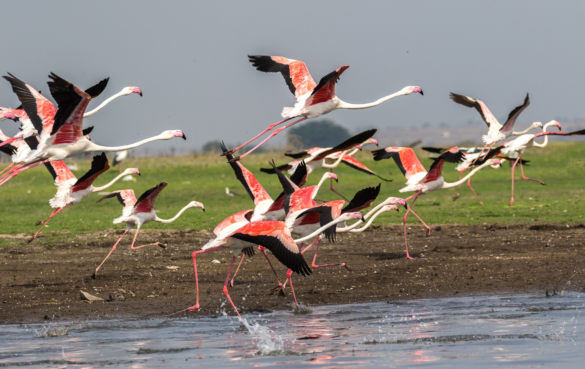 Pink Frenzy by DrSudhir Hasamnis