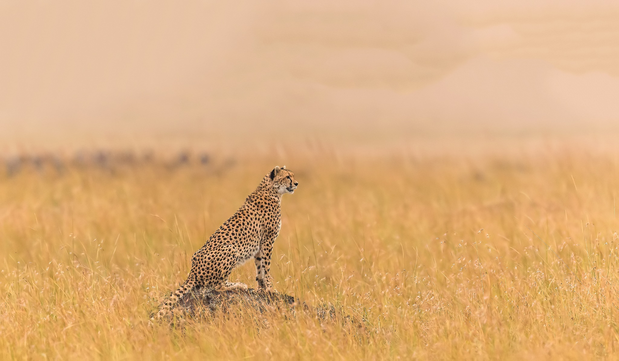 On the watch... by DrSudhir Hasamnis