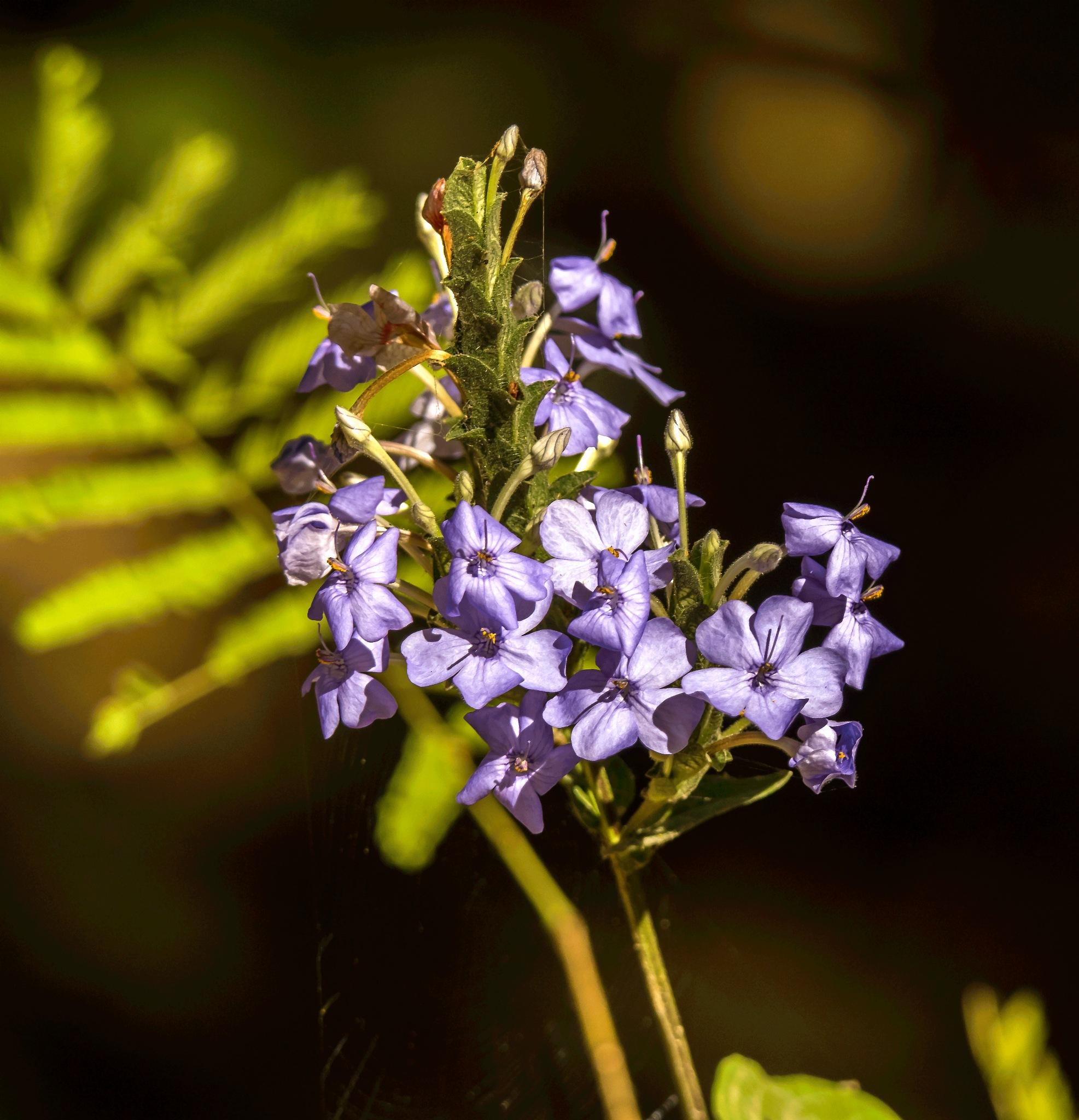 Photo in Nature #flowers #purple #roadside #pune #blue