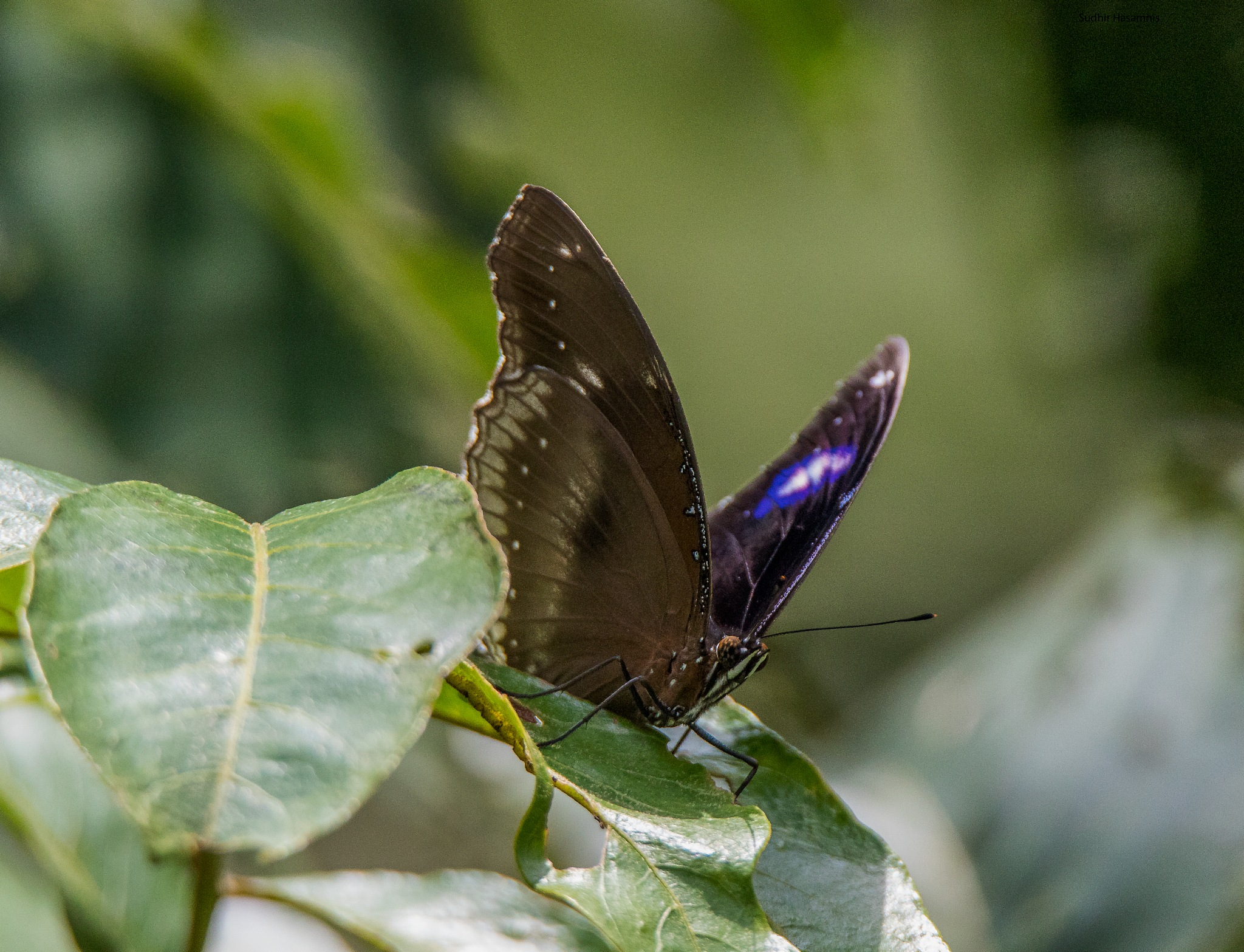 The Butterfly by DrSudhir Hasamnis