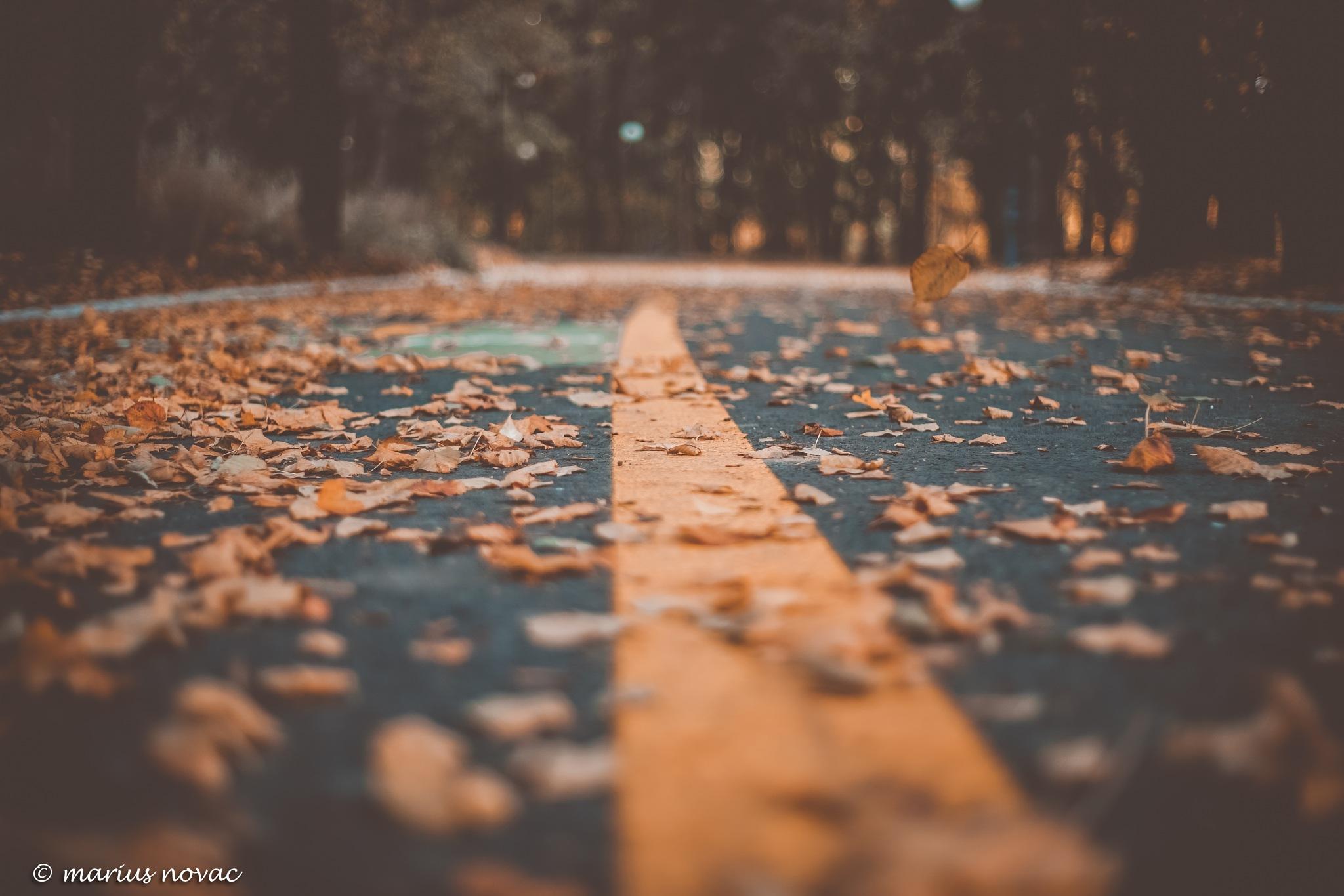 Autumn in the city by mariusnovac