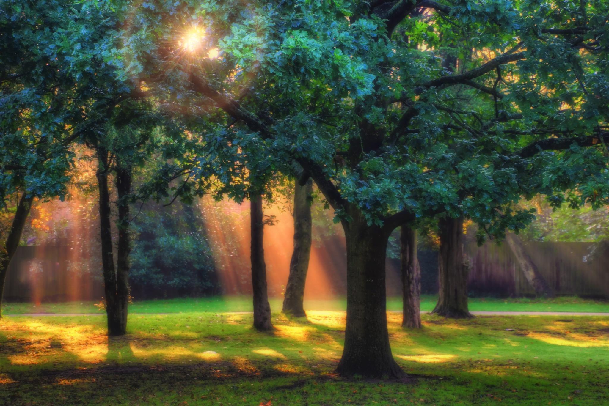 SUNBEAMS by Derek Tomkins