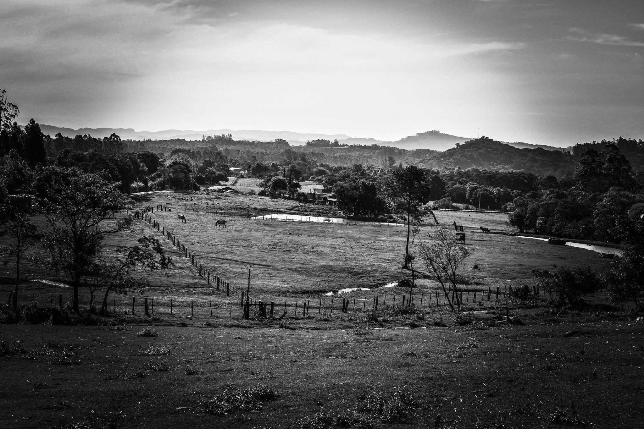 rural... by wilsonalves