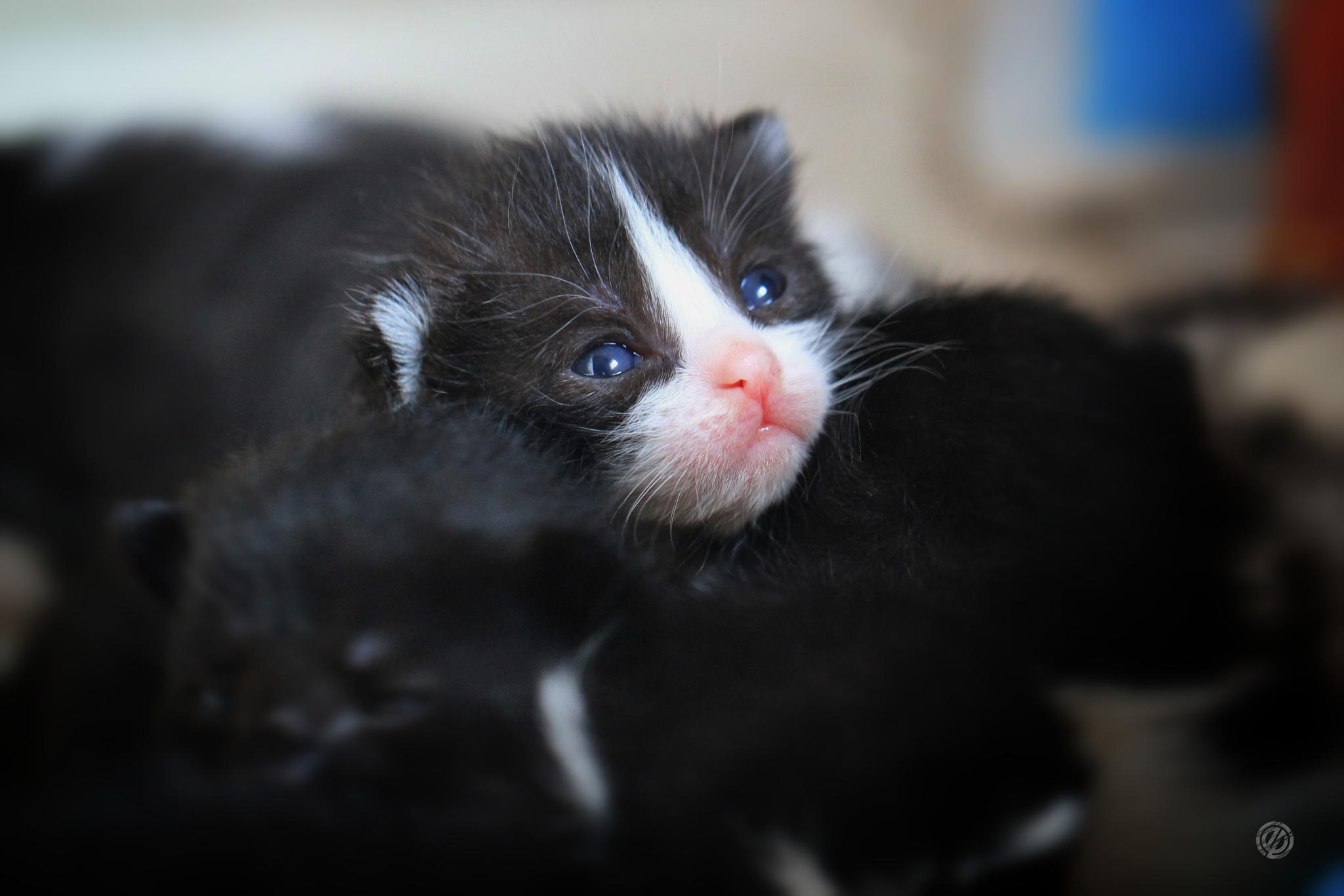 Kitten II by Ergo