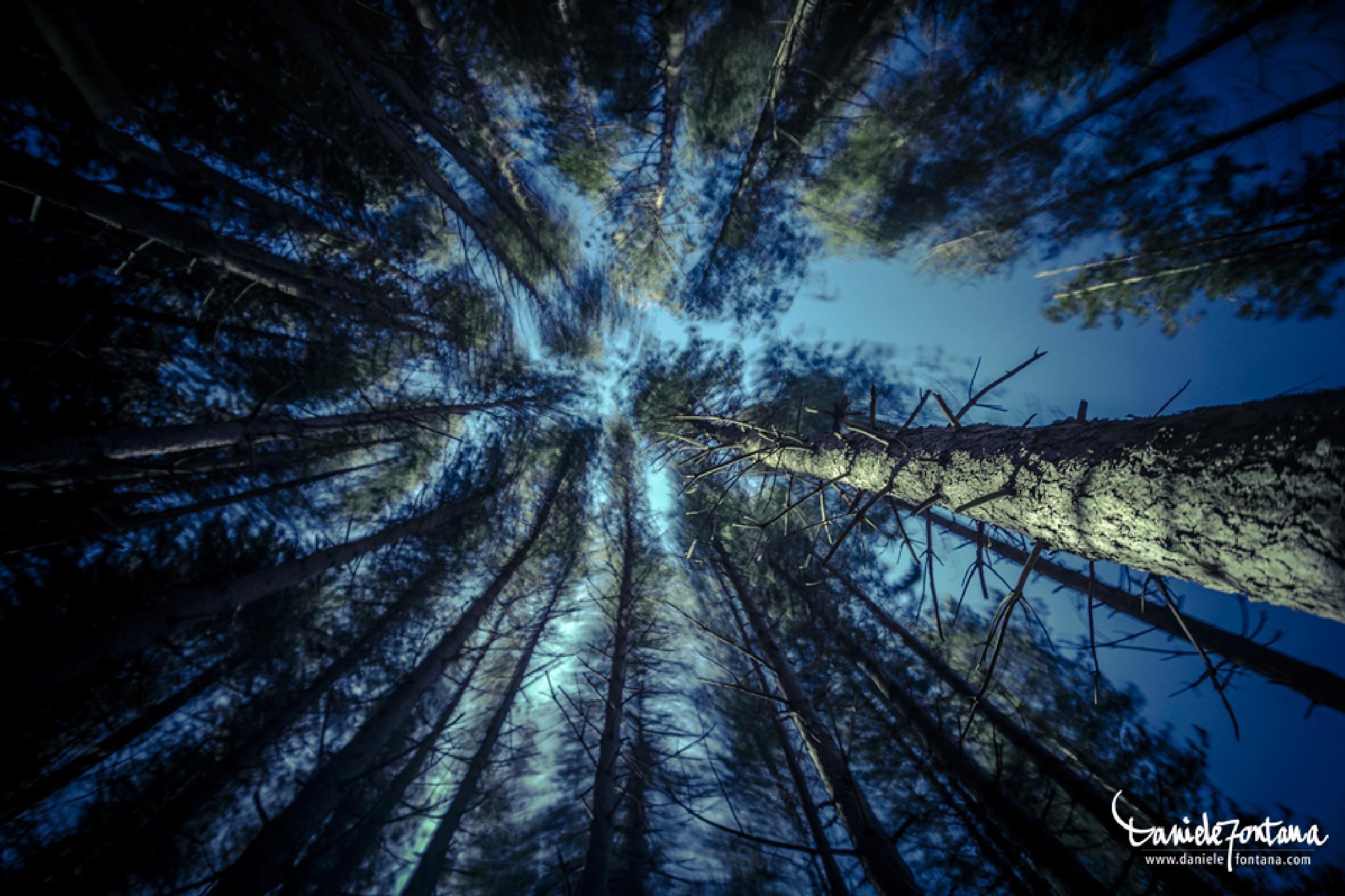 In the woods by danielefontana.com