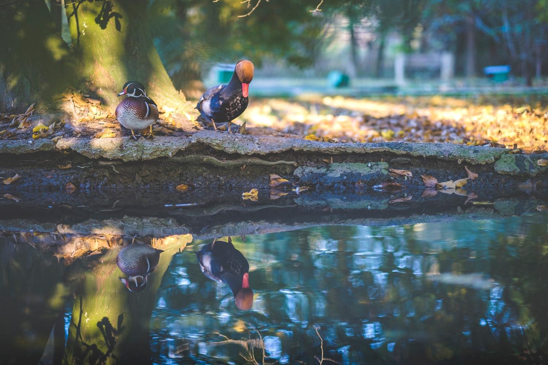 birds by Andrea Rignanese
