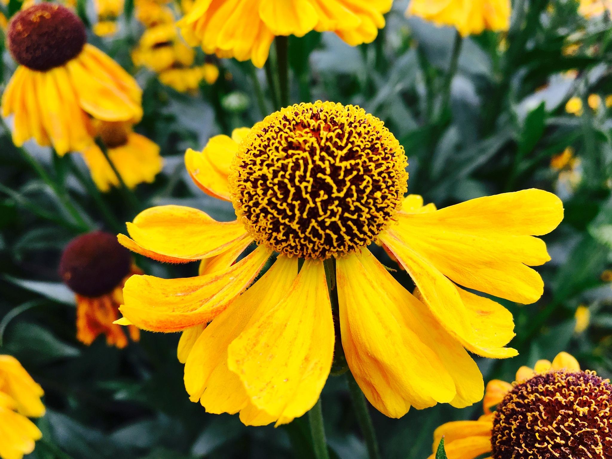 Flower by Mark Hawksworth