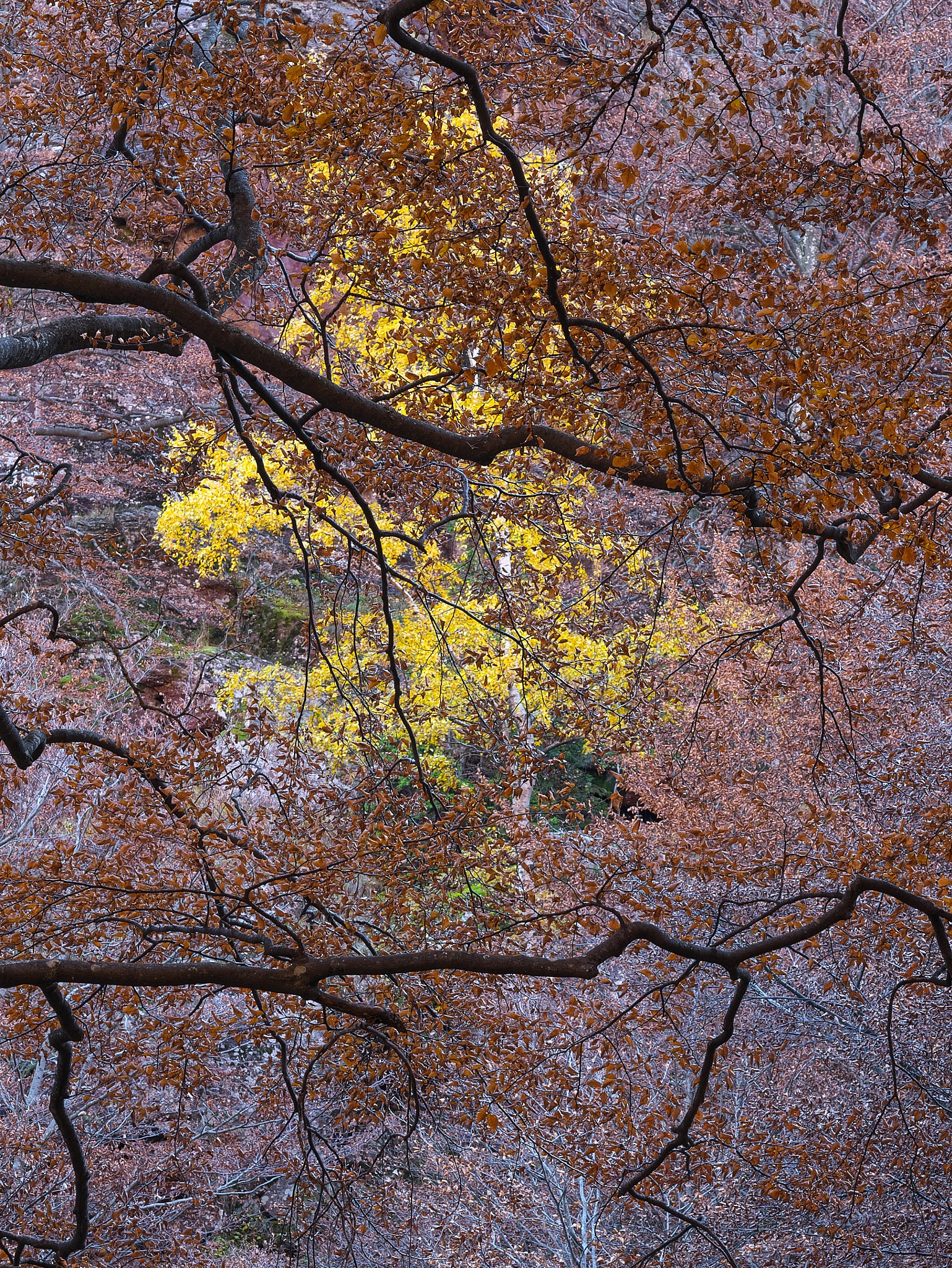Autumn - abstract by Stanvas