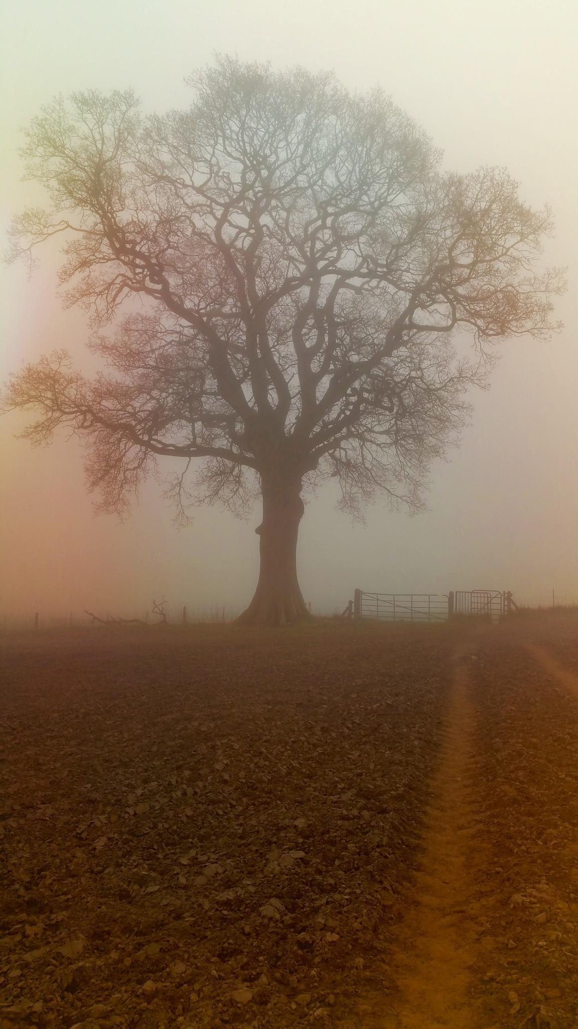 Foggy morning by DarekSycz