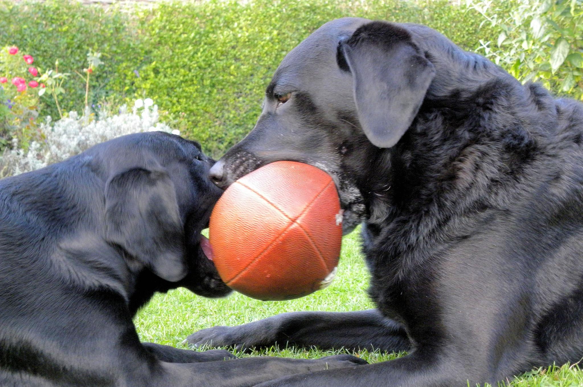 My ball,no it's mine..... by Hunter8