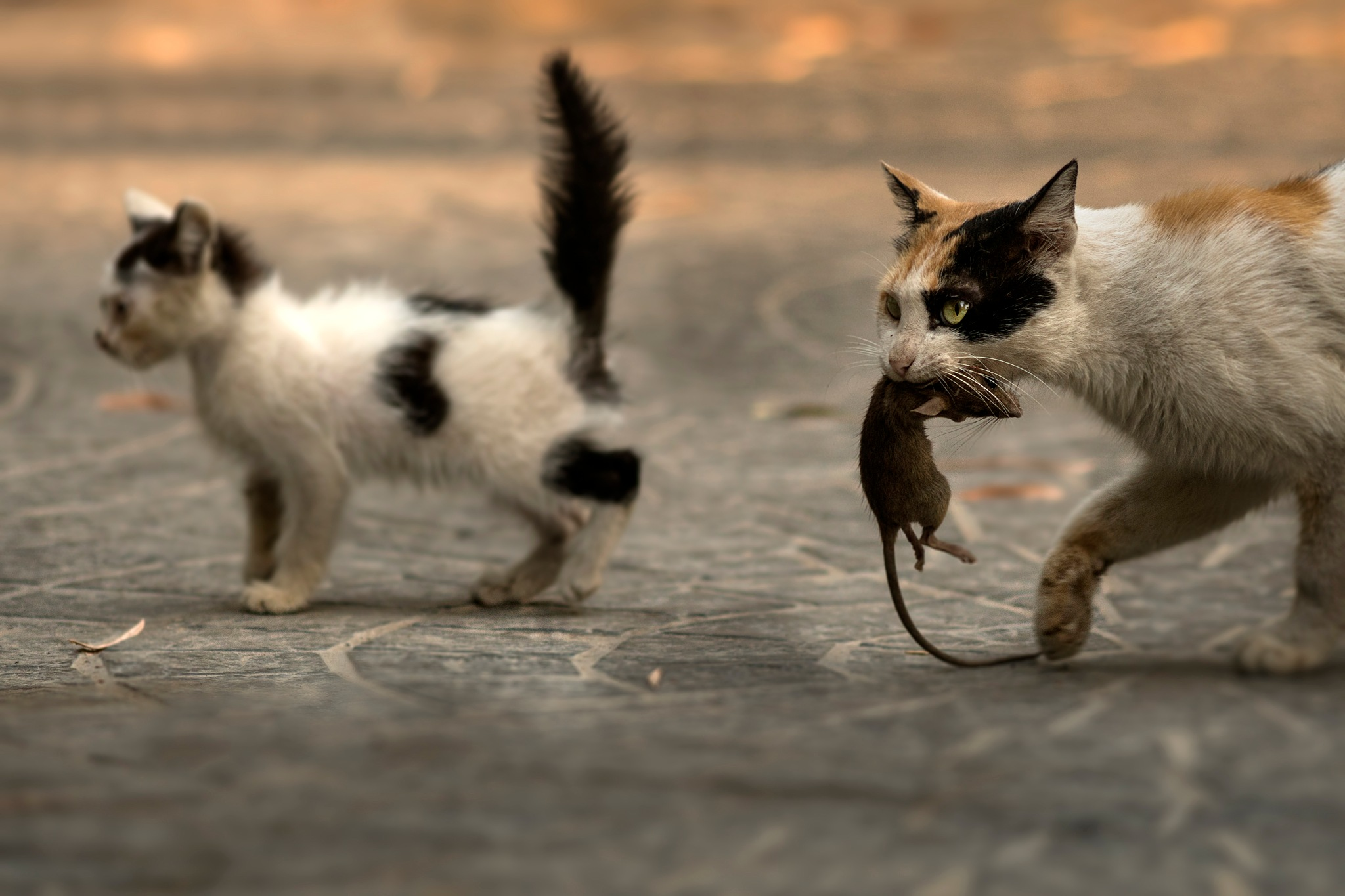 Tom and Jerry by F.A. Bhatti