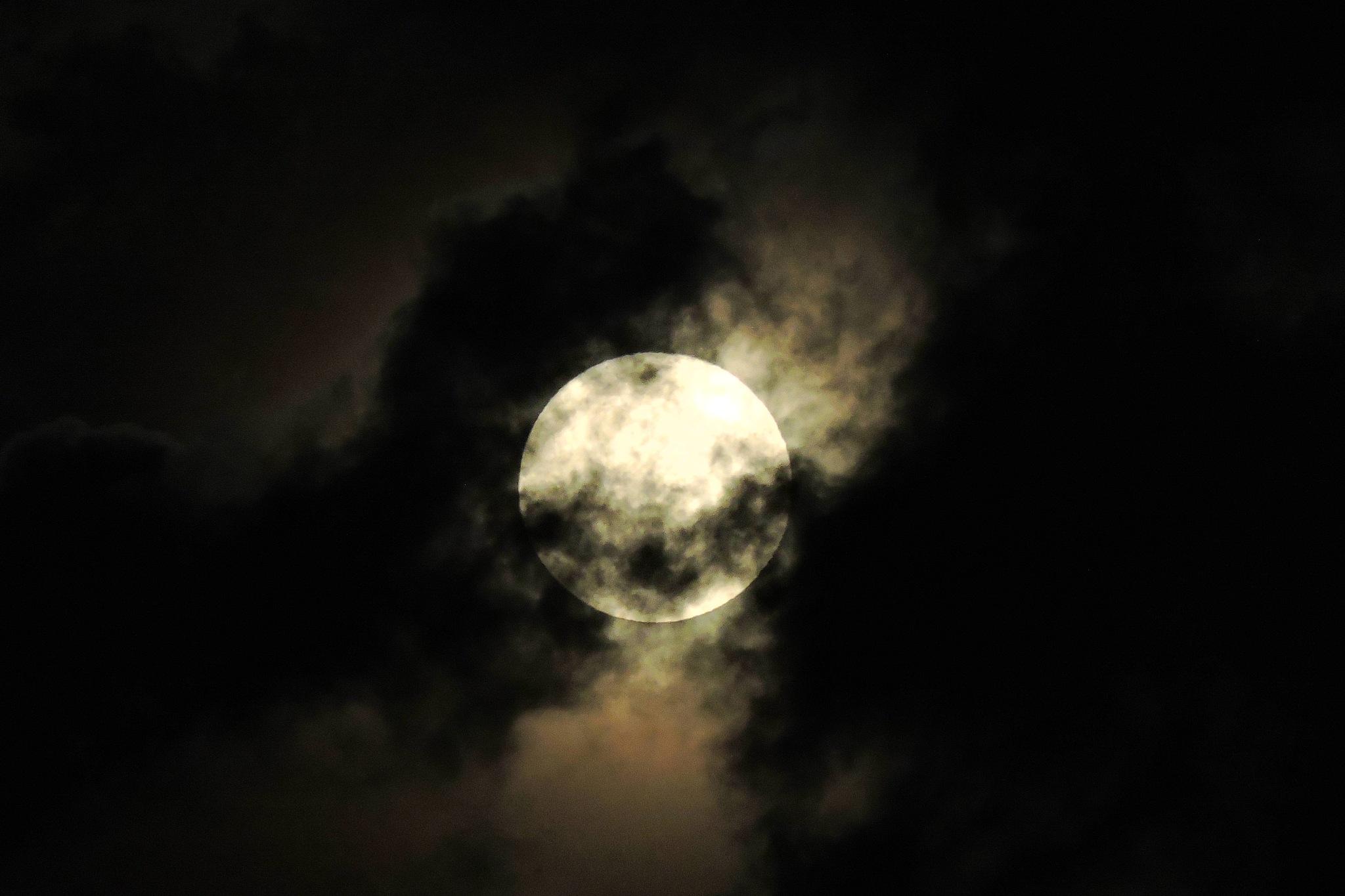 Harvest moon by G. A. McComas