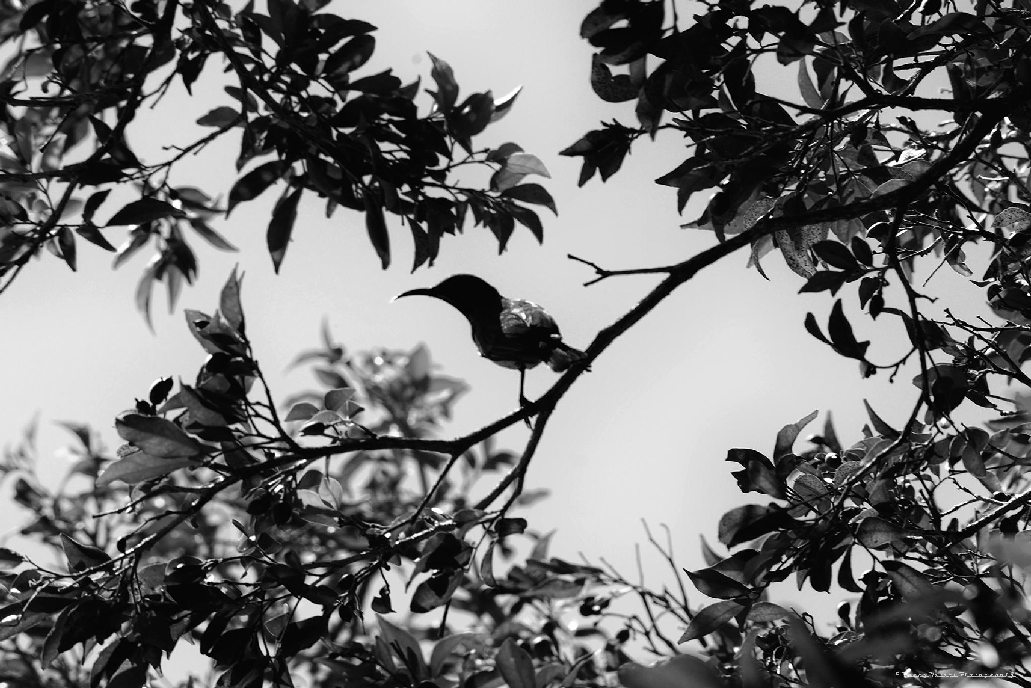Bird in mono by harryhazari