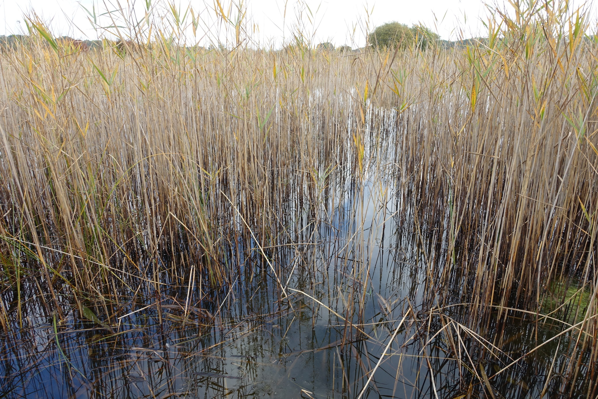 Fenscape. Reed & Water by Simon Ciappara