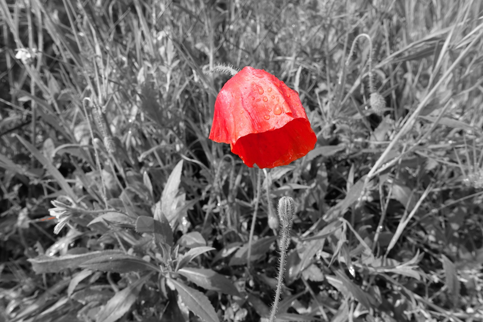 Lest we Forget the Conscripts who didn't want to go and died alone. by Simon Ciappara