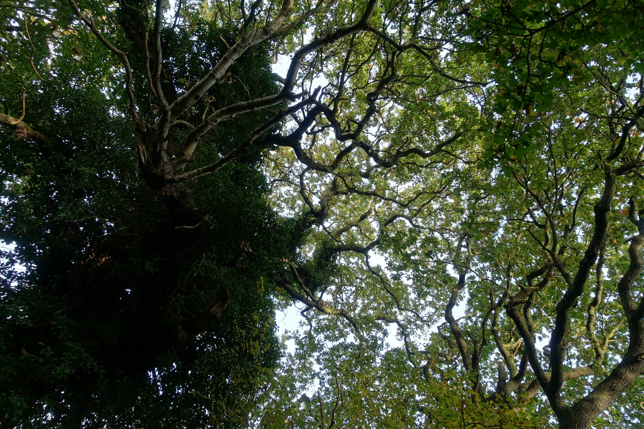 Oak sky glimpses! by Simon Ciappara